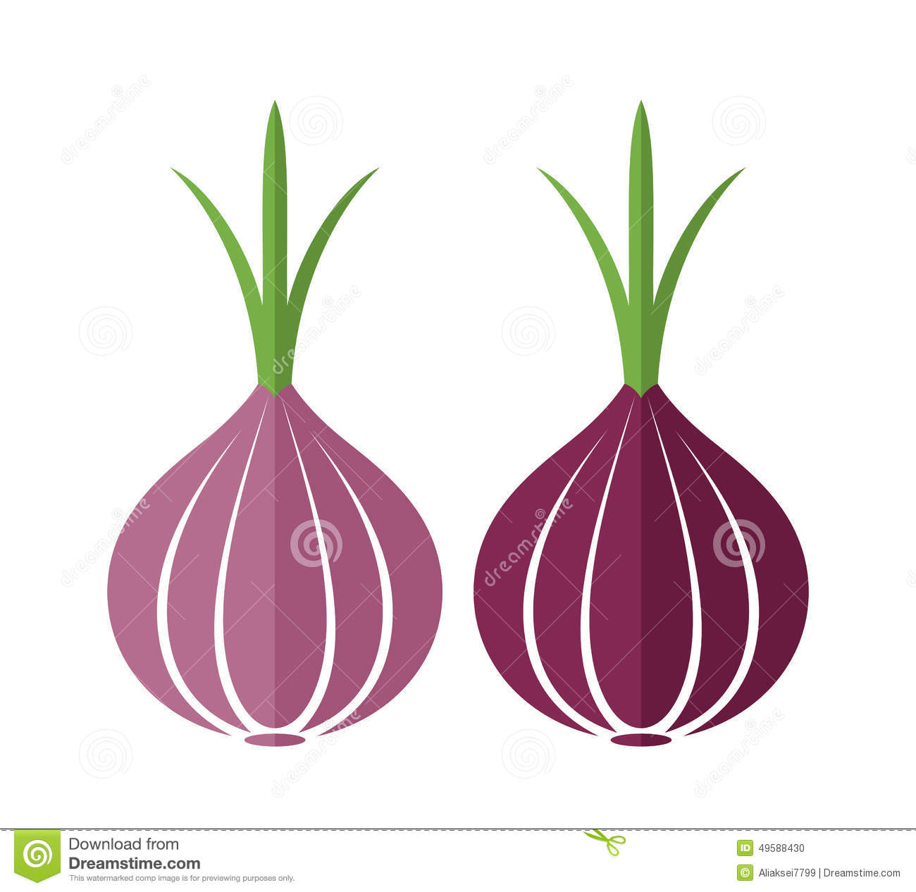 Onion Stock Vector - Image: 49588430