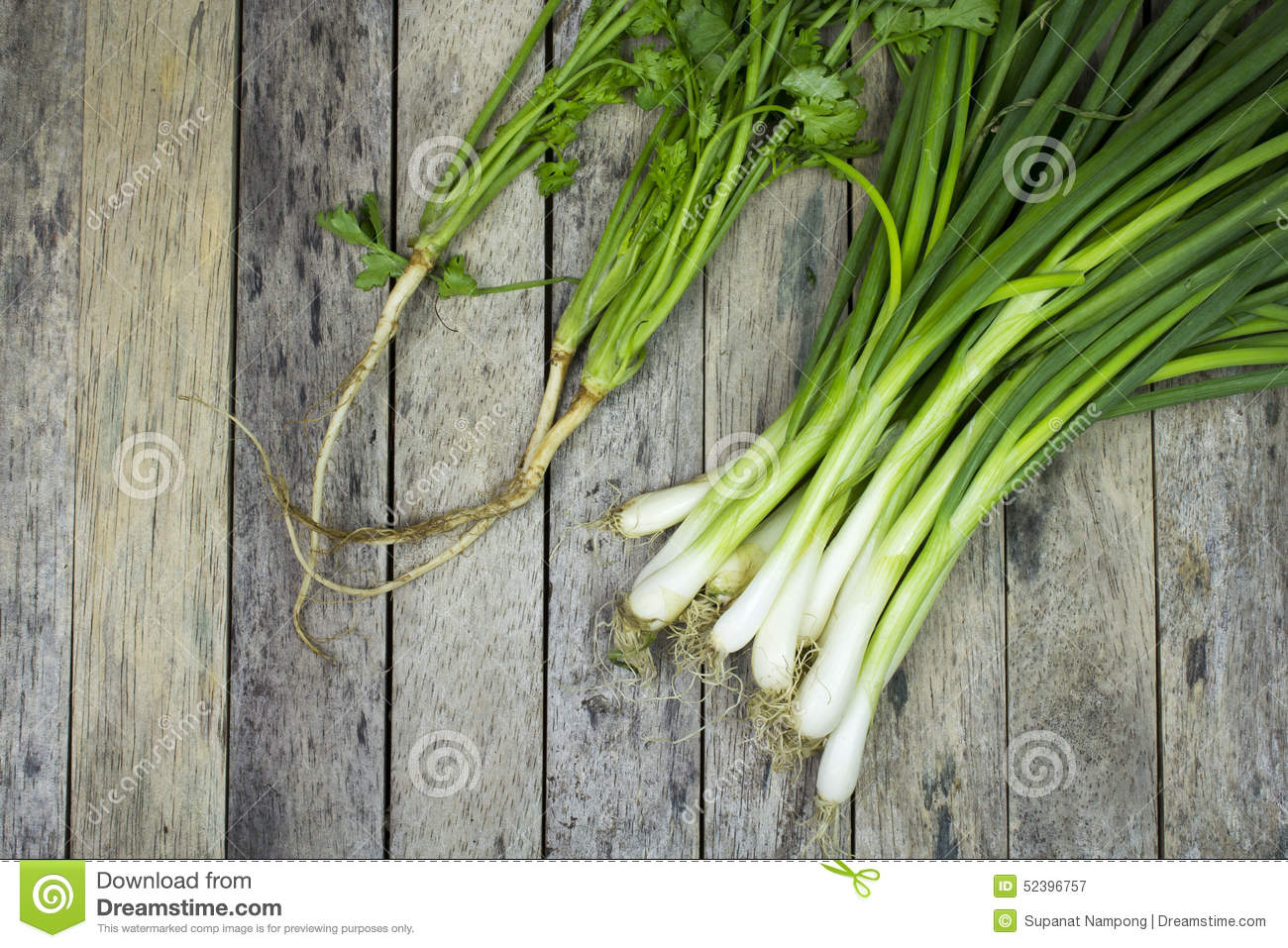 Onion Welsh And Coriander On Wood Plank Stock Photo