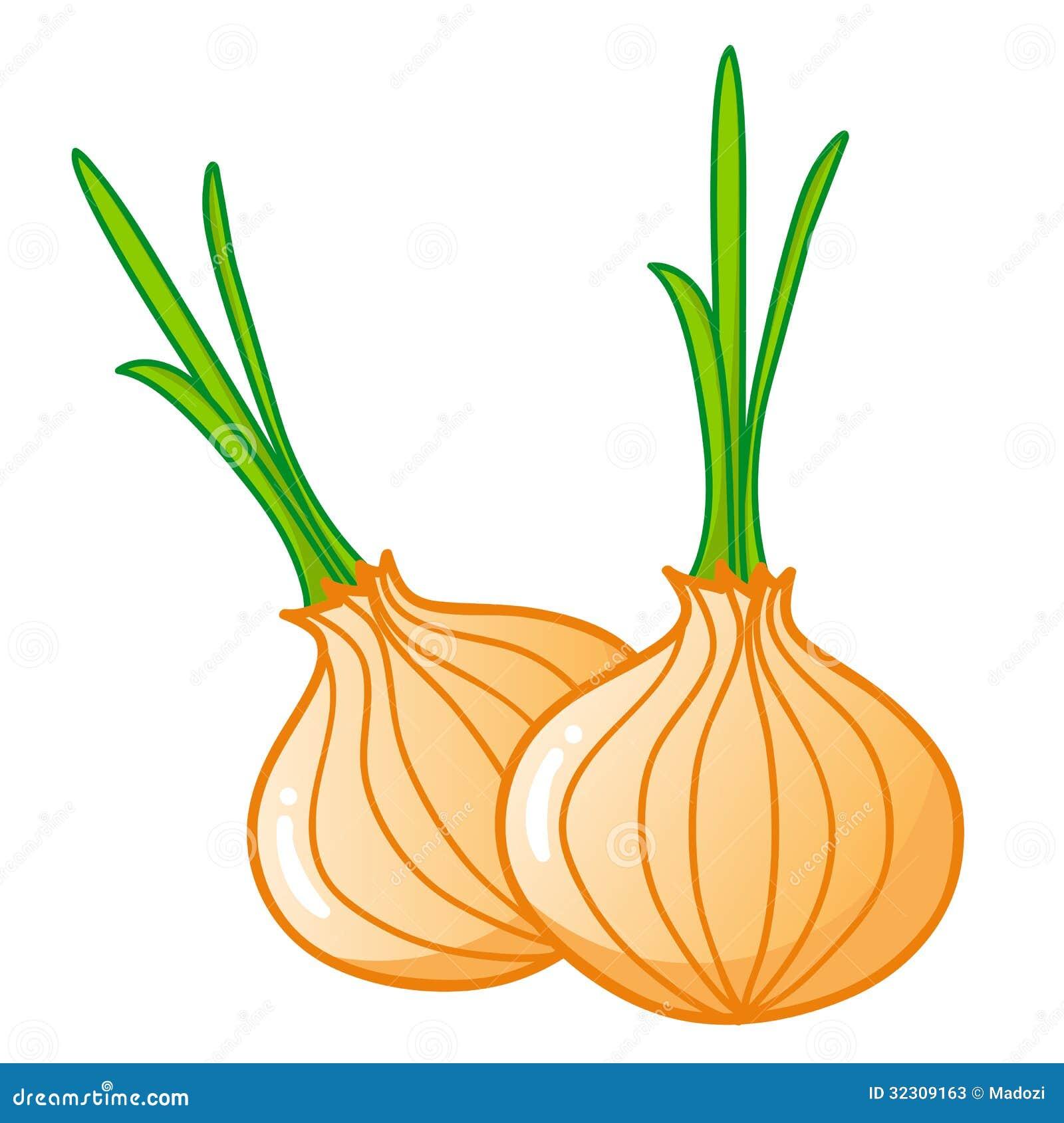 Onions Isolated Illustration Stock Vector - Illustration ...