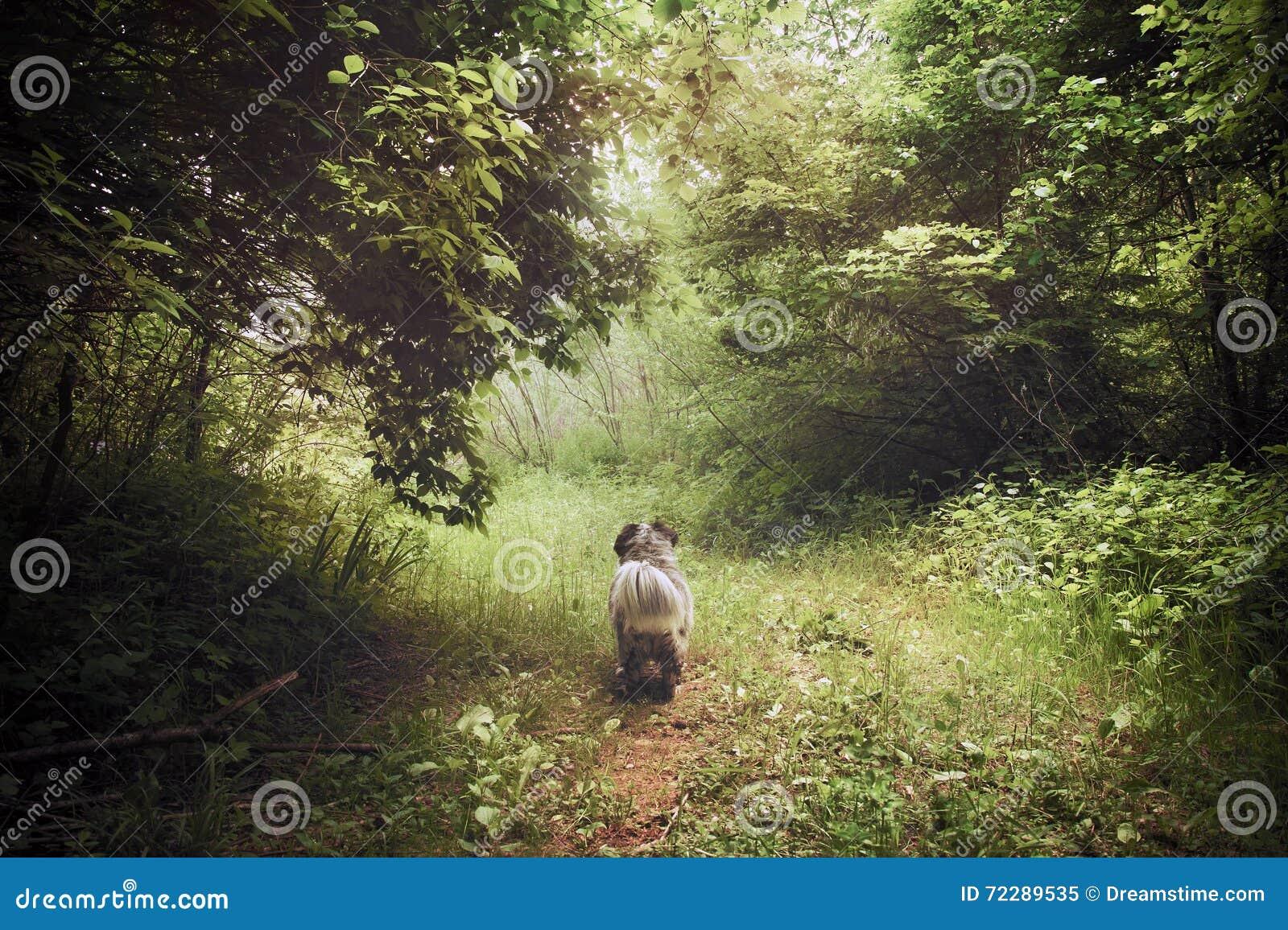 Download Oniric древесина с собакой стоковое изображение. изображение насчитывающей собака - 72289535