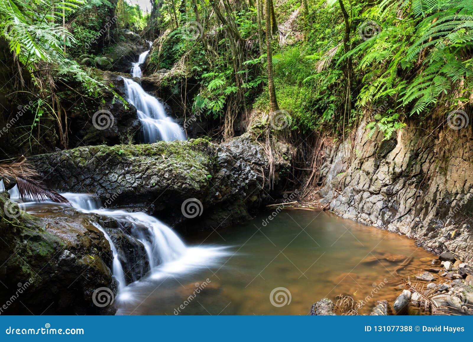 Onomea vattenfall, hawaiansk tropisk botanisk trädgård, Hili, Hawaii Omgivet av den tropiska skogen, vaggar pölen och under
