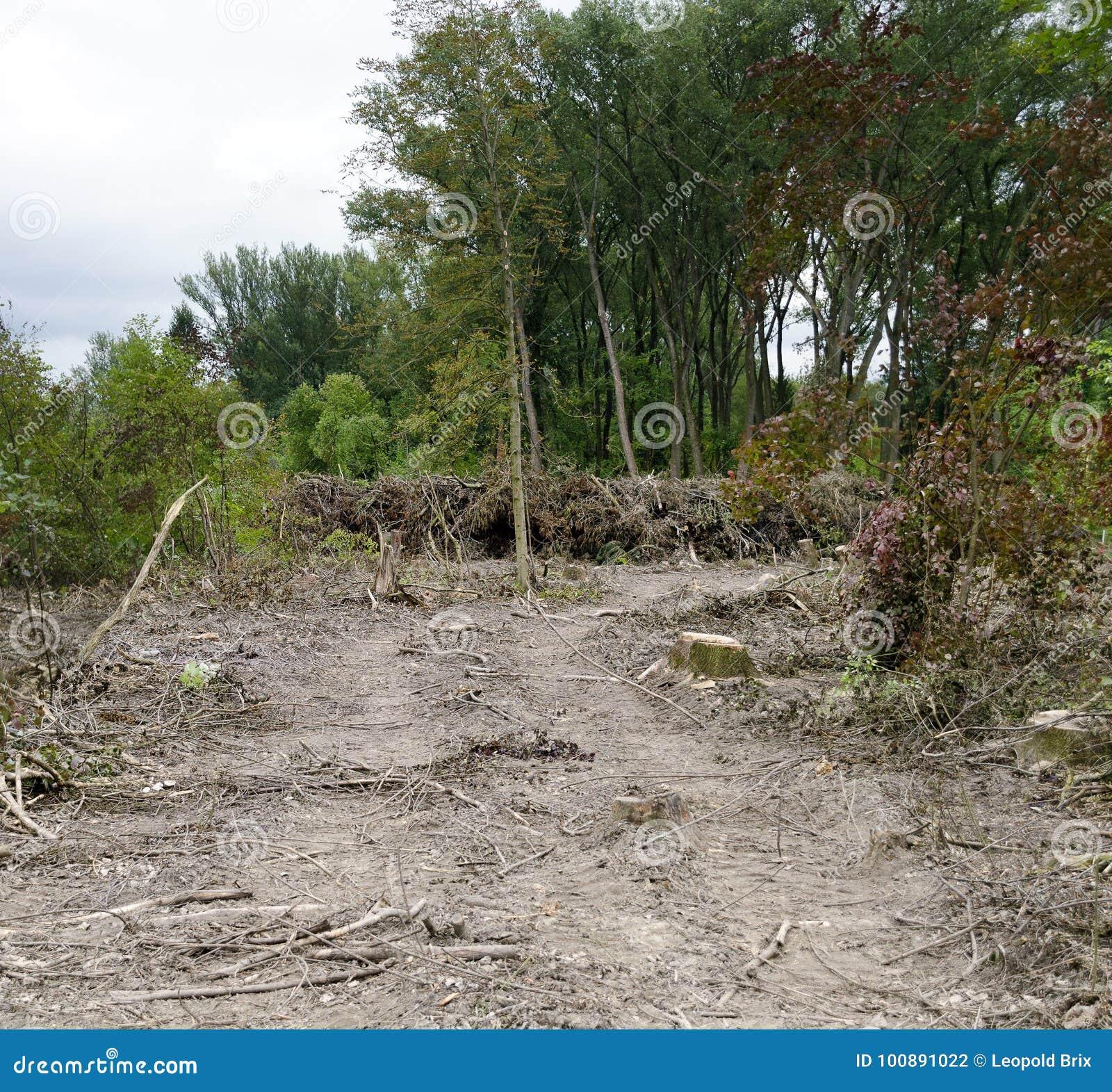 Ontruimd gebied van een oeverbos