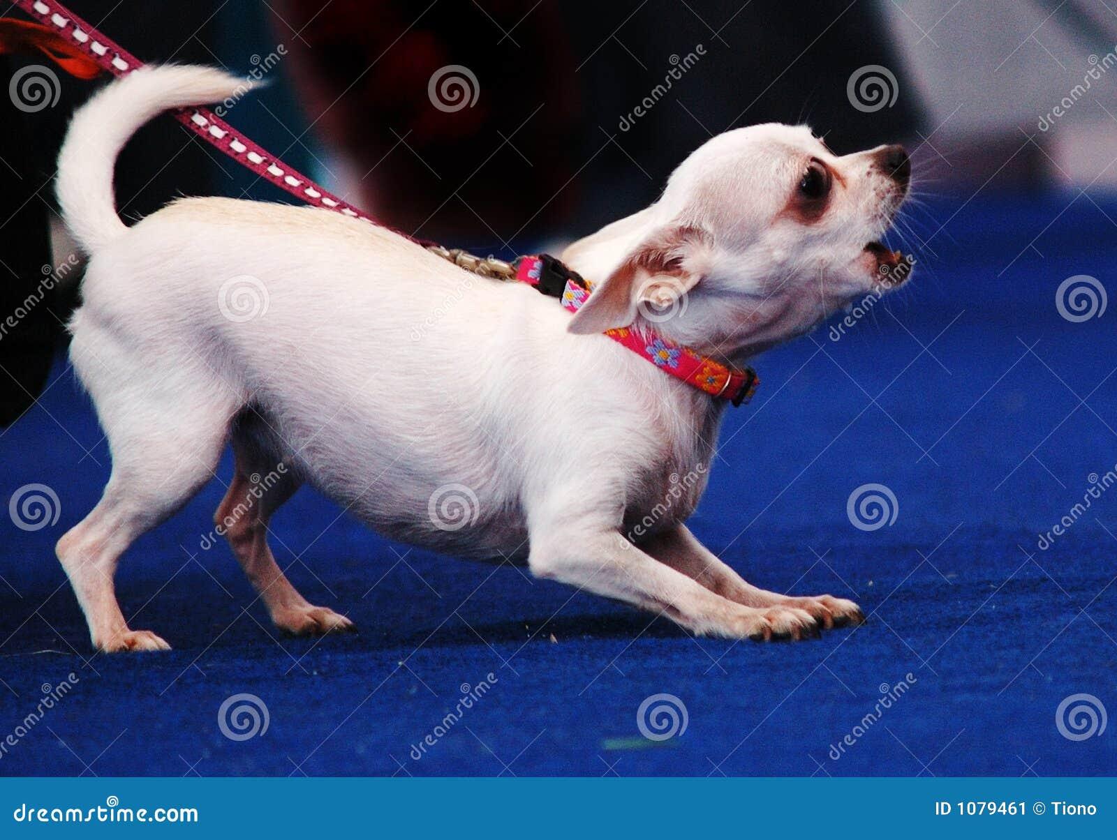 Ontschorsende hond