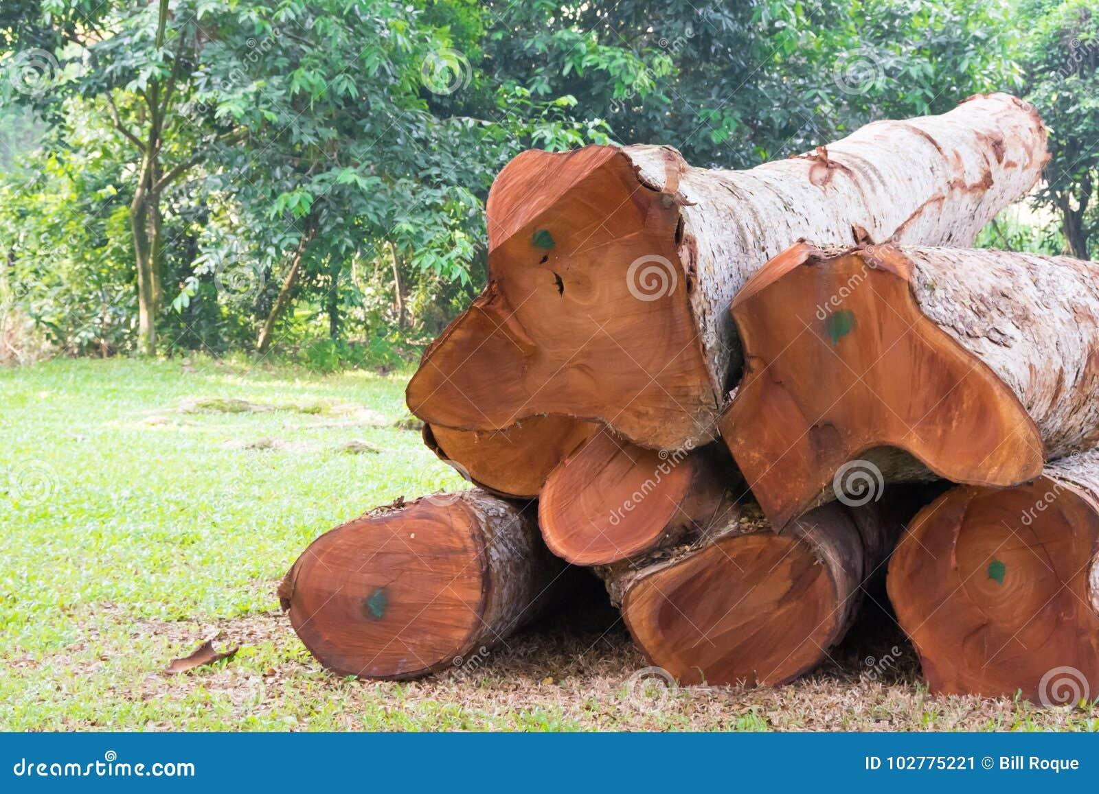 Onwettige registreren scherpe bomen