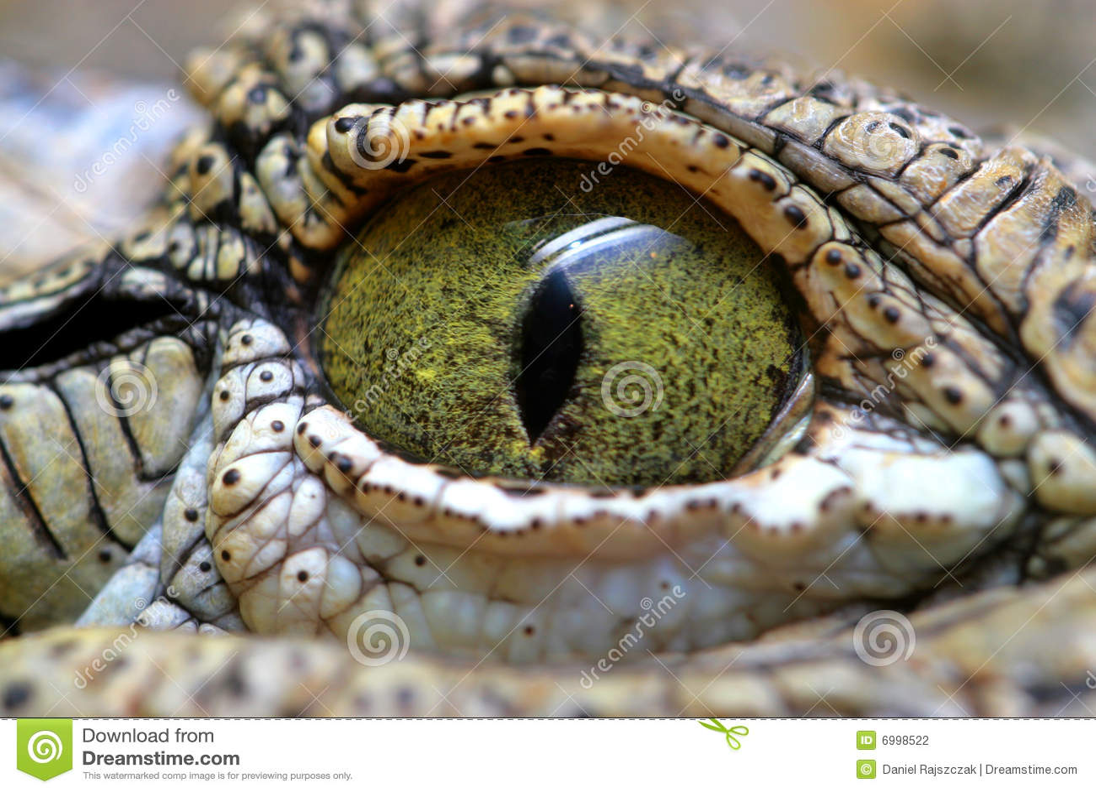 Oog van de krokodil