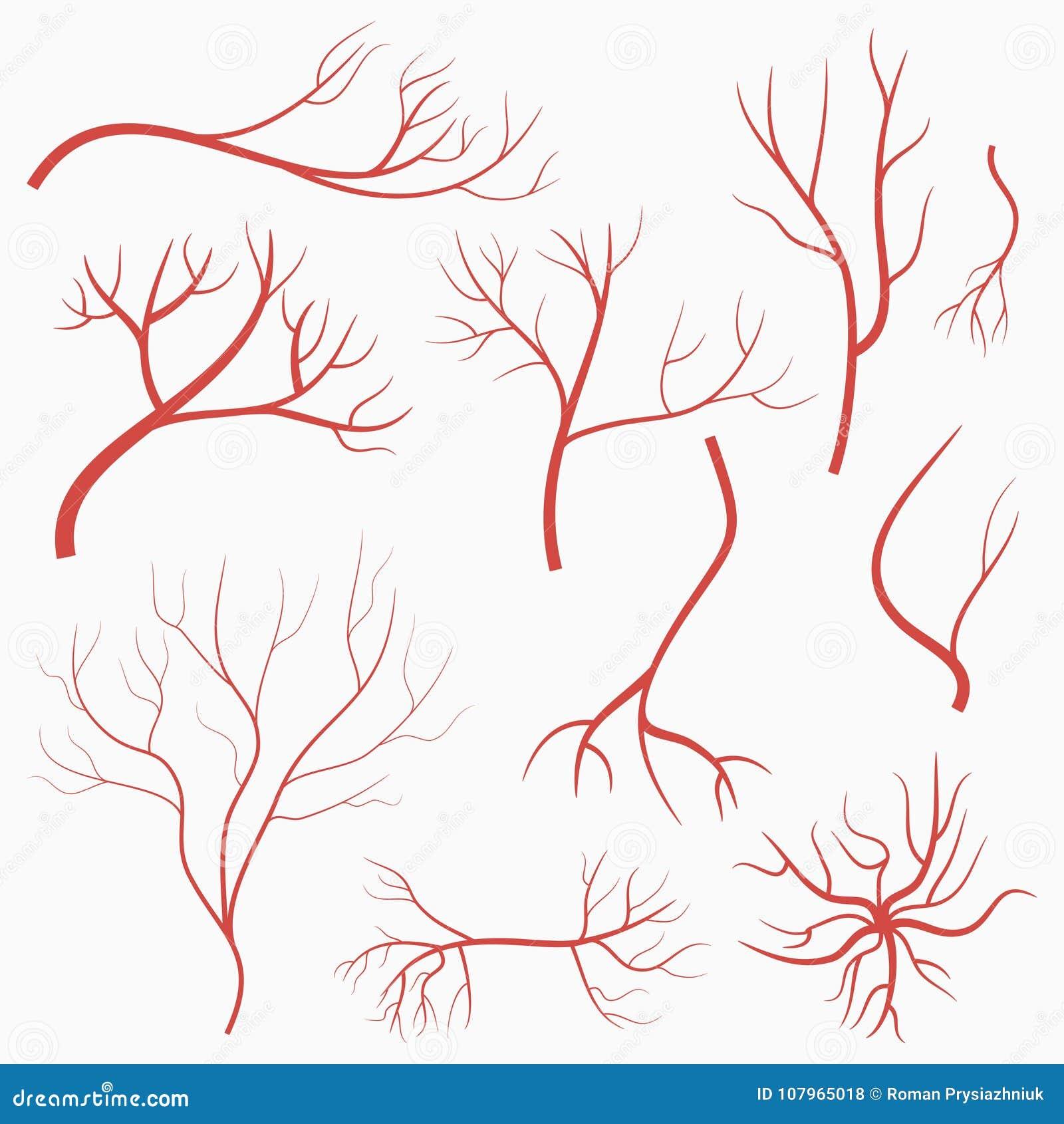Oogaders en slagaders Reeks rode schepen Elementen van menselijk bloedsysteem Vector