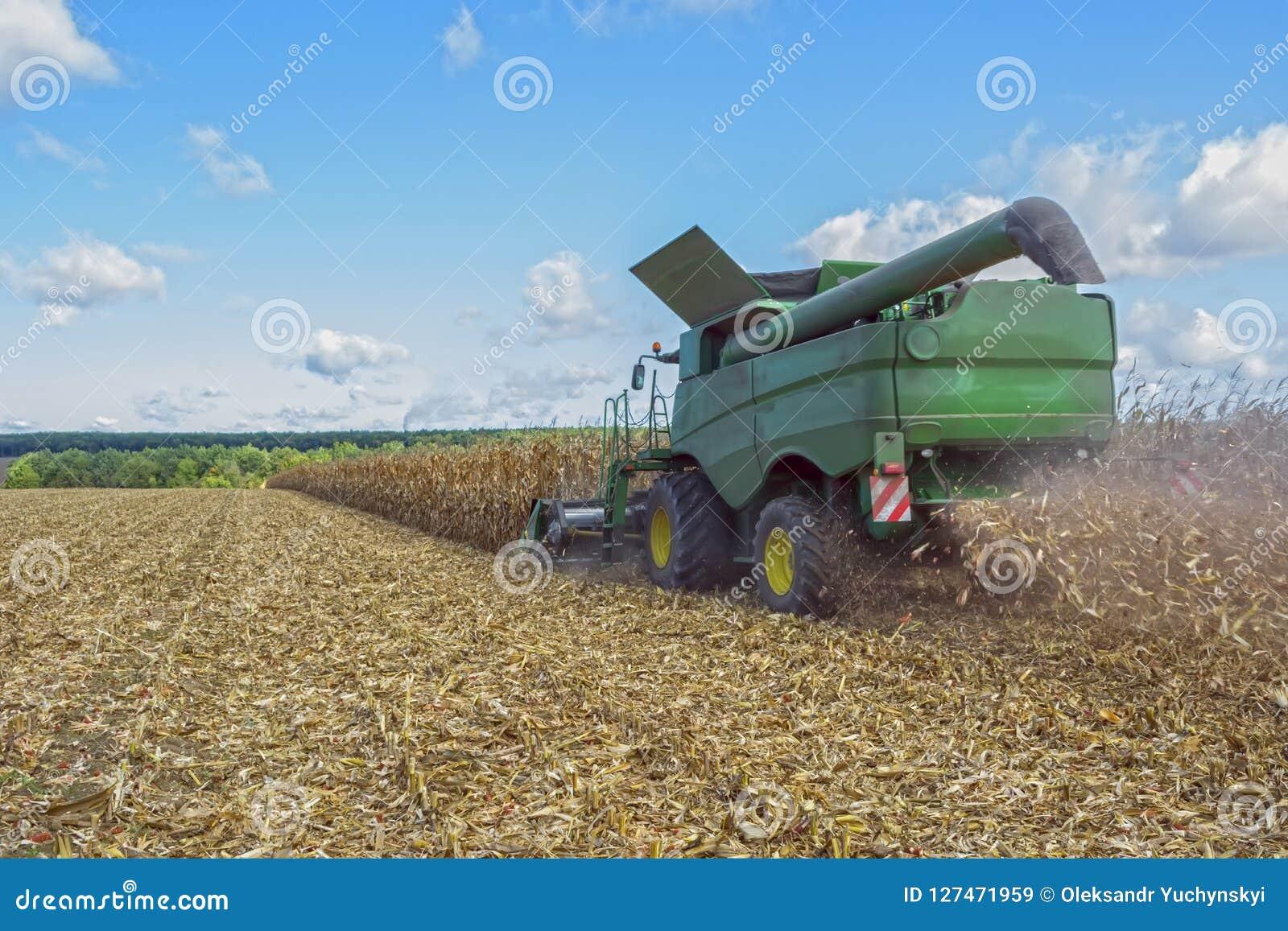 Oogstend graan door a maaidorser, door het leegmaken en vervoer van korrel wordt gevolgd die Het werk op het gebied in de stralen