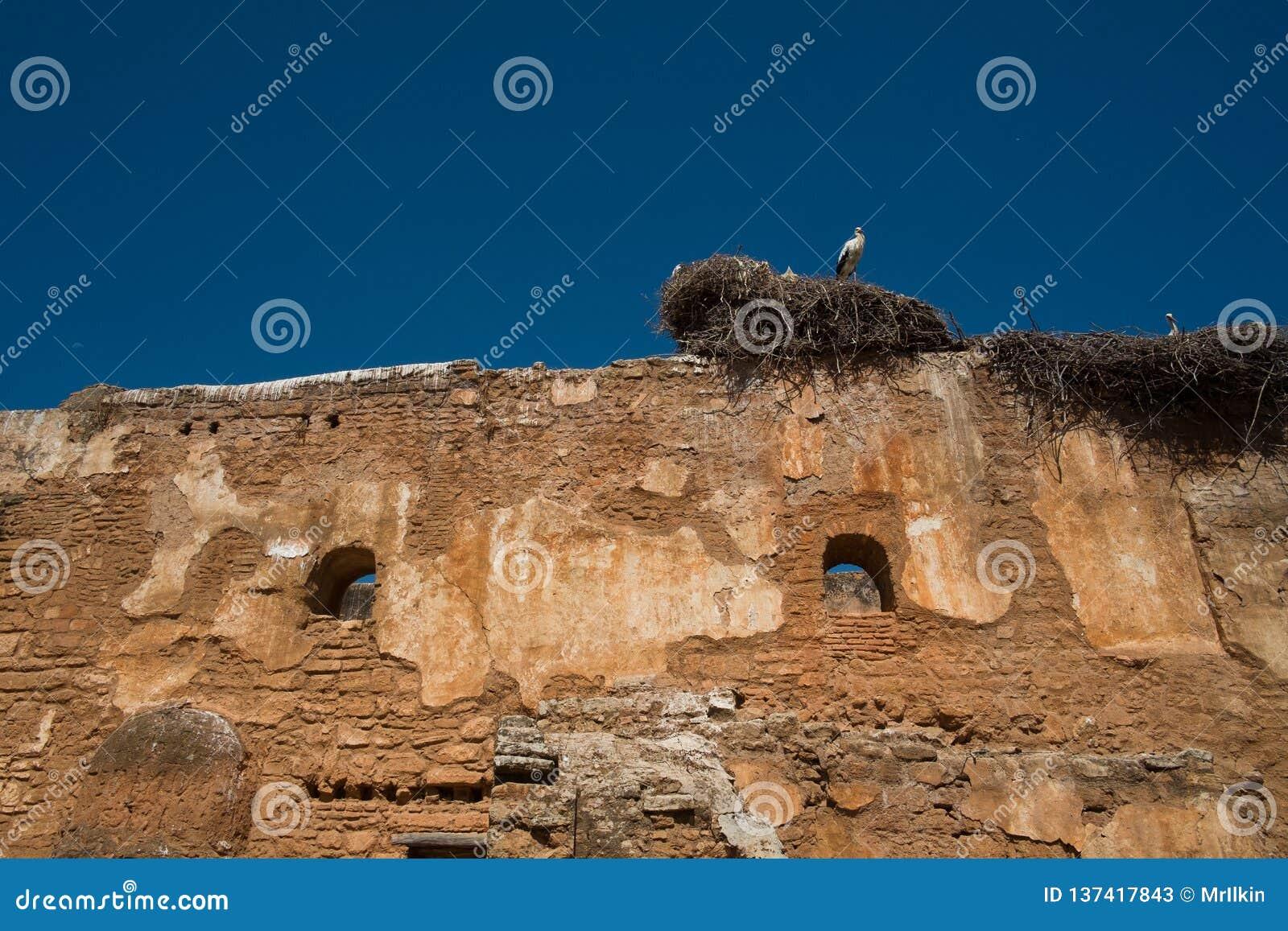 Ooievaar in het nest tegen de blauwe hemel op de oude muur van de ruïnes
