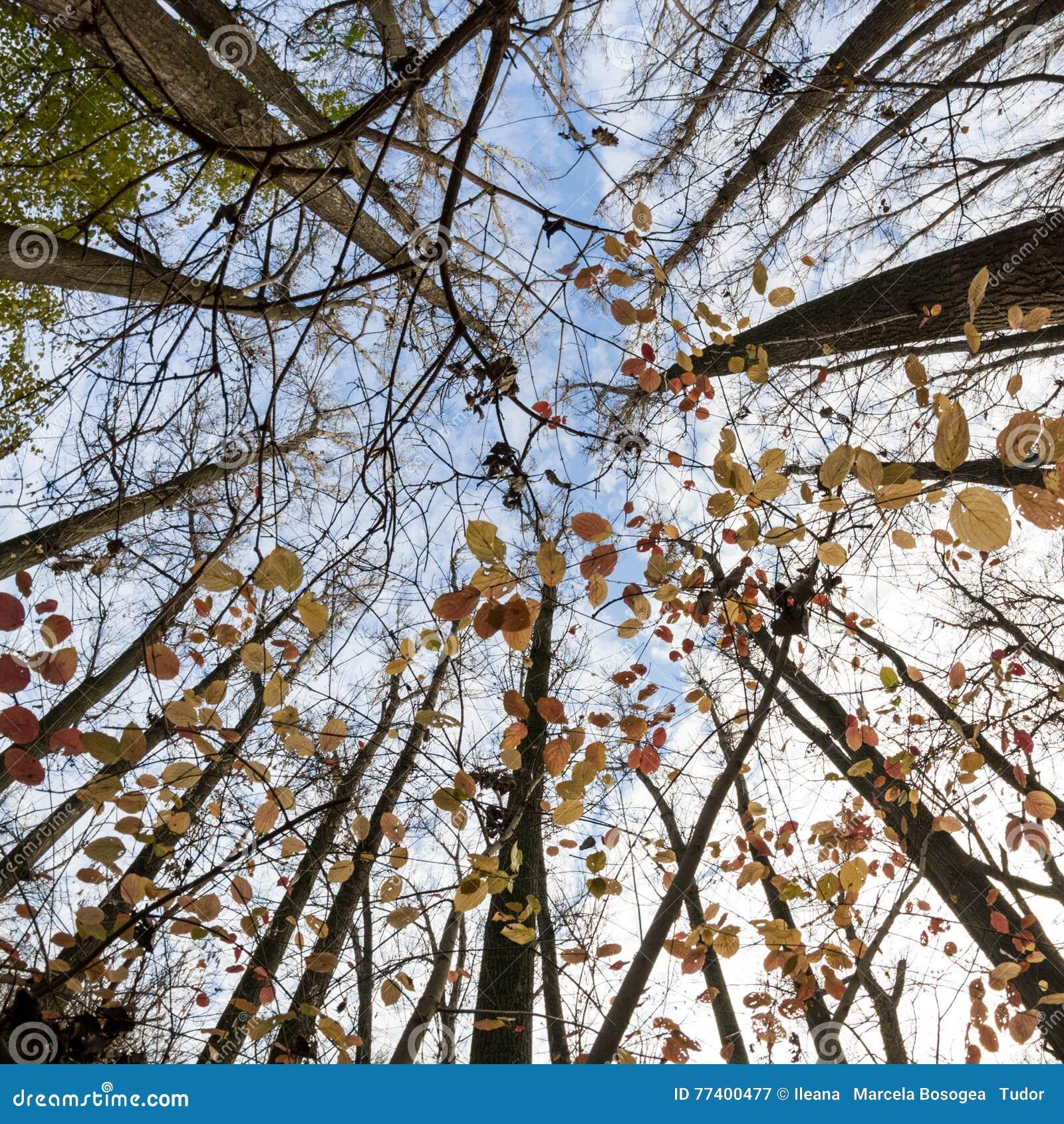 Opóźniona jesień w parku z pięknymi, kolorowymi liśćmi,