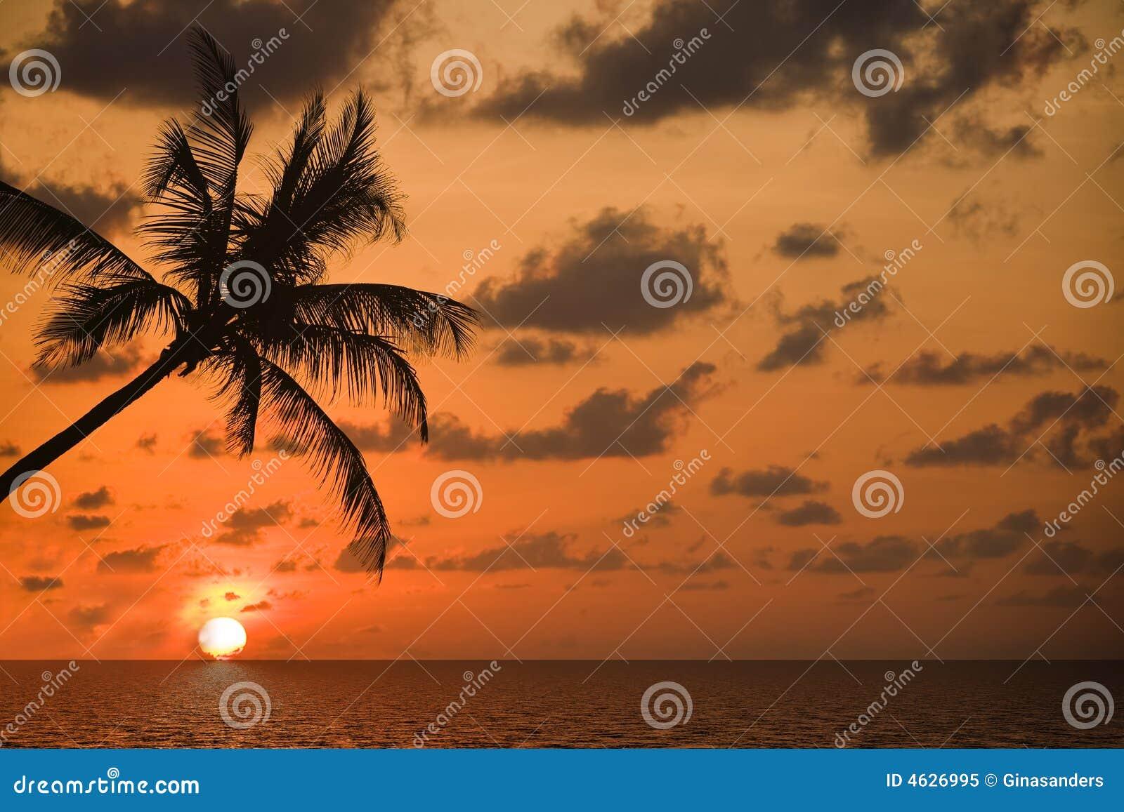 Op het droom-strand