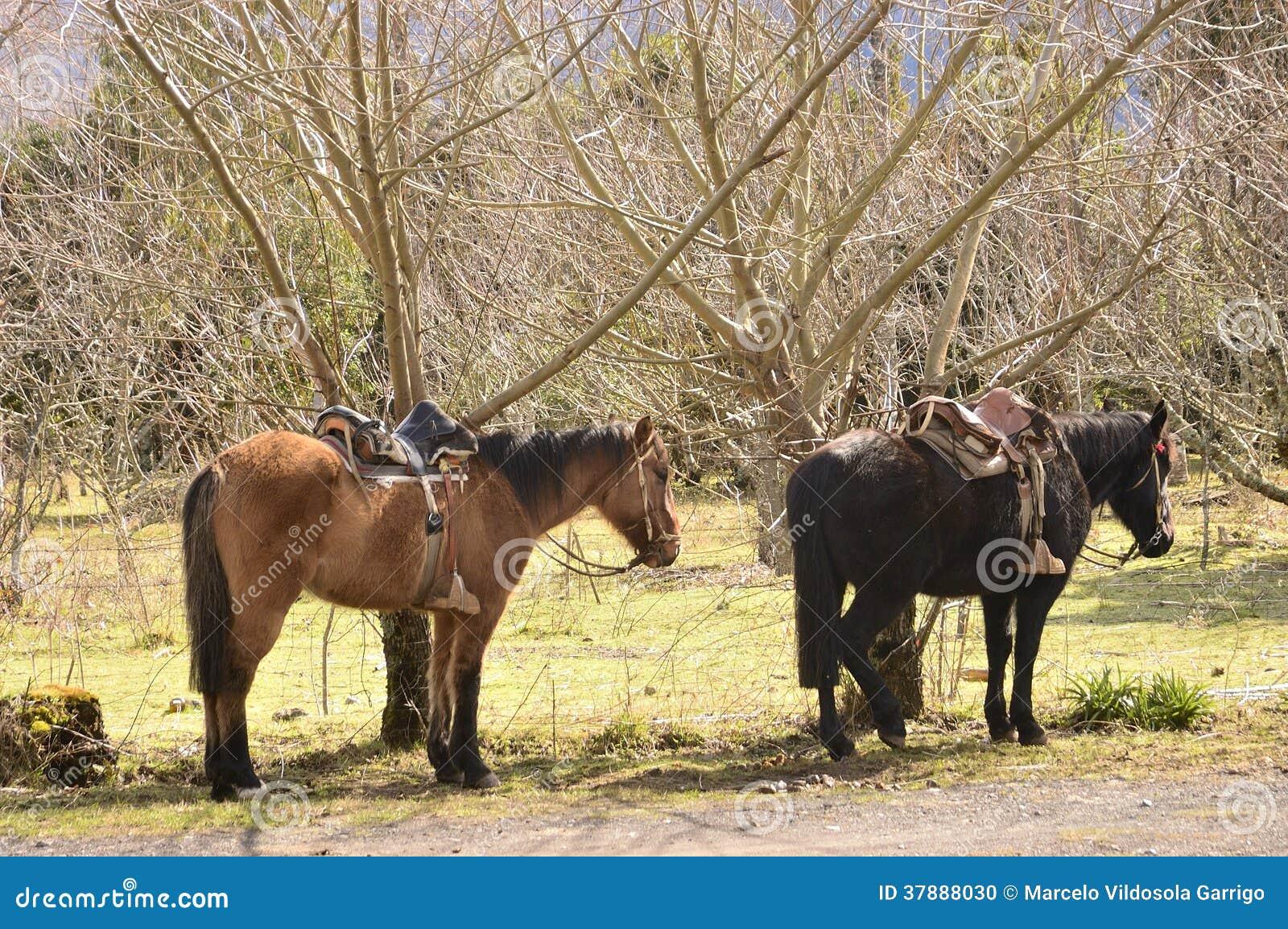 Op te zetten paard
