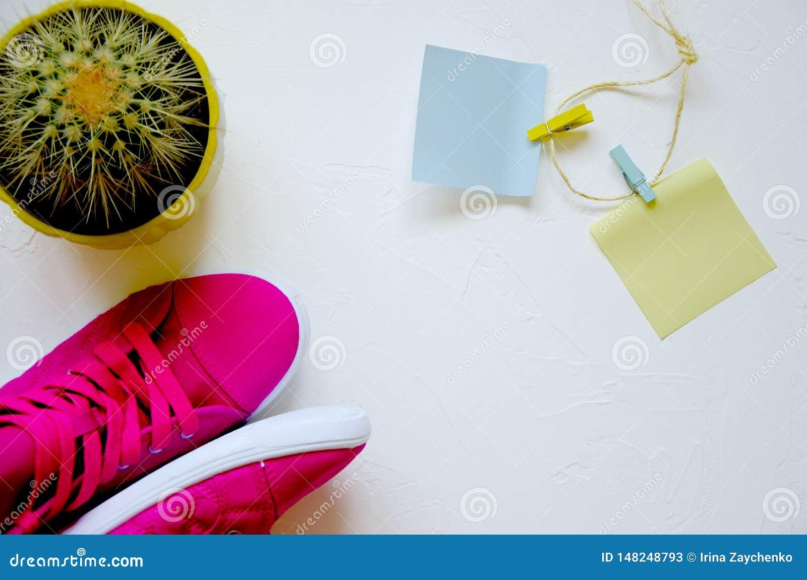Op witte concrete roze tennisschoenen en cactus