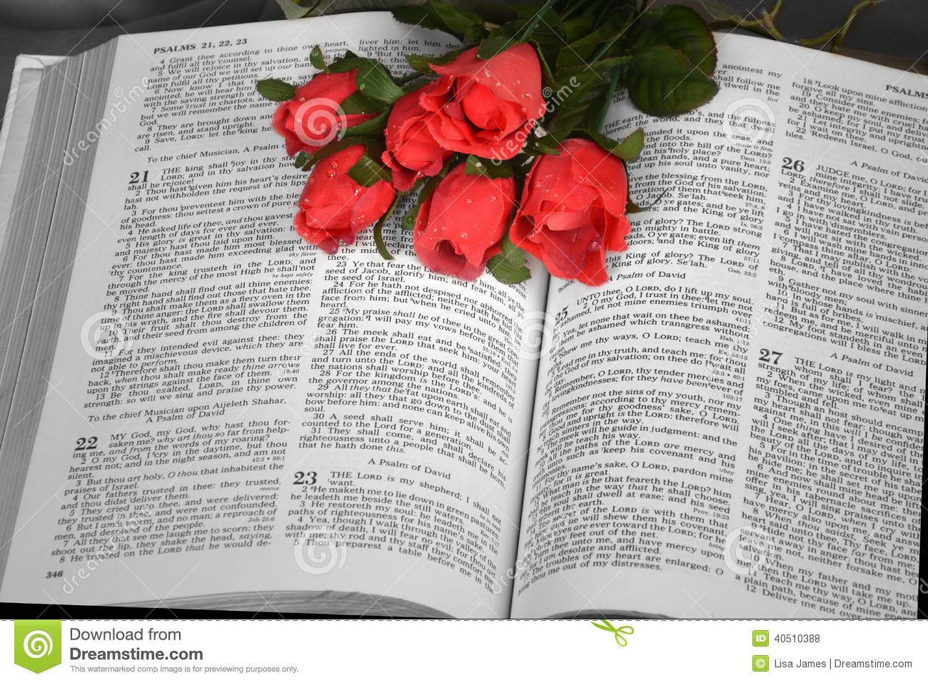 Open Bible with red roses