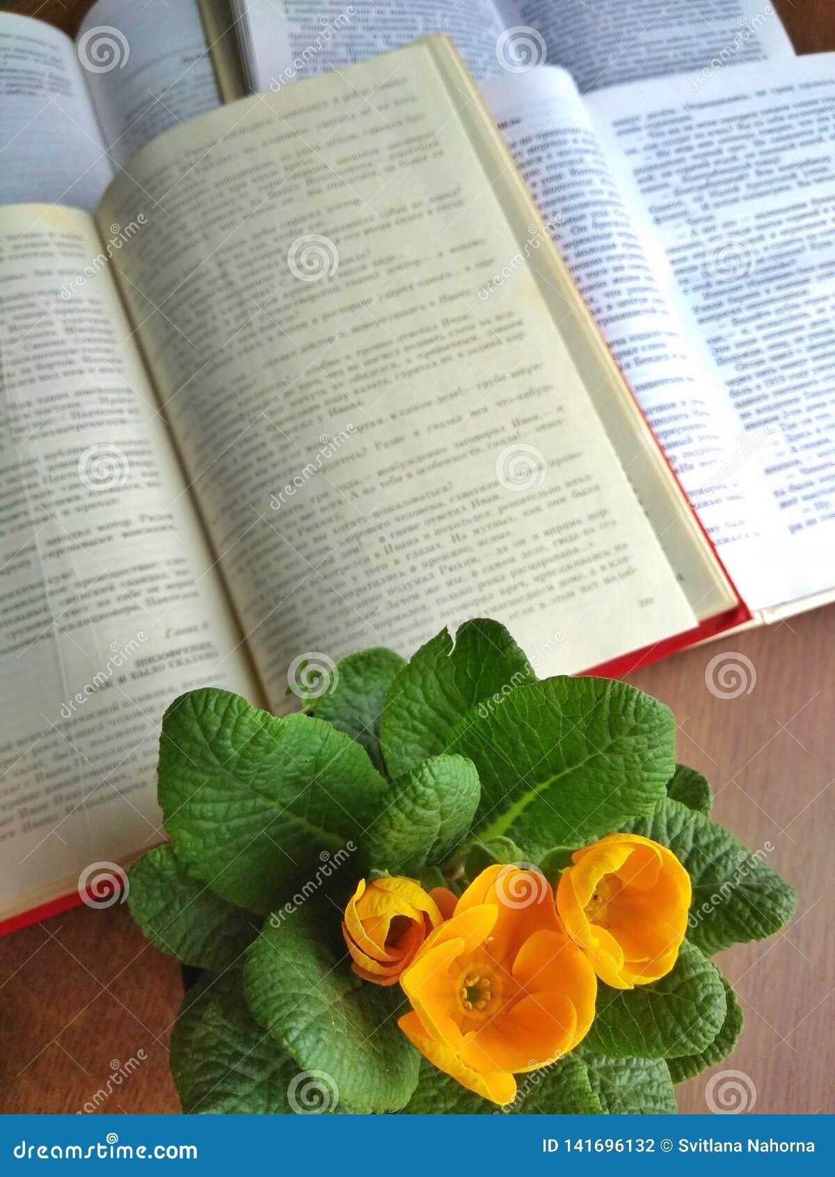 Open boeken op een houten lijst dichtbij een gele bloem in een pot