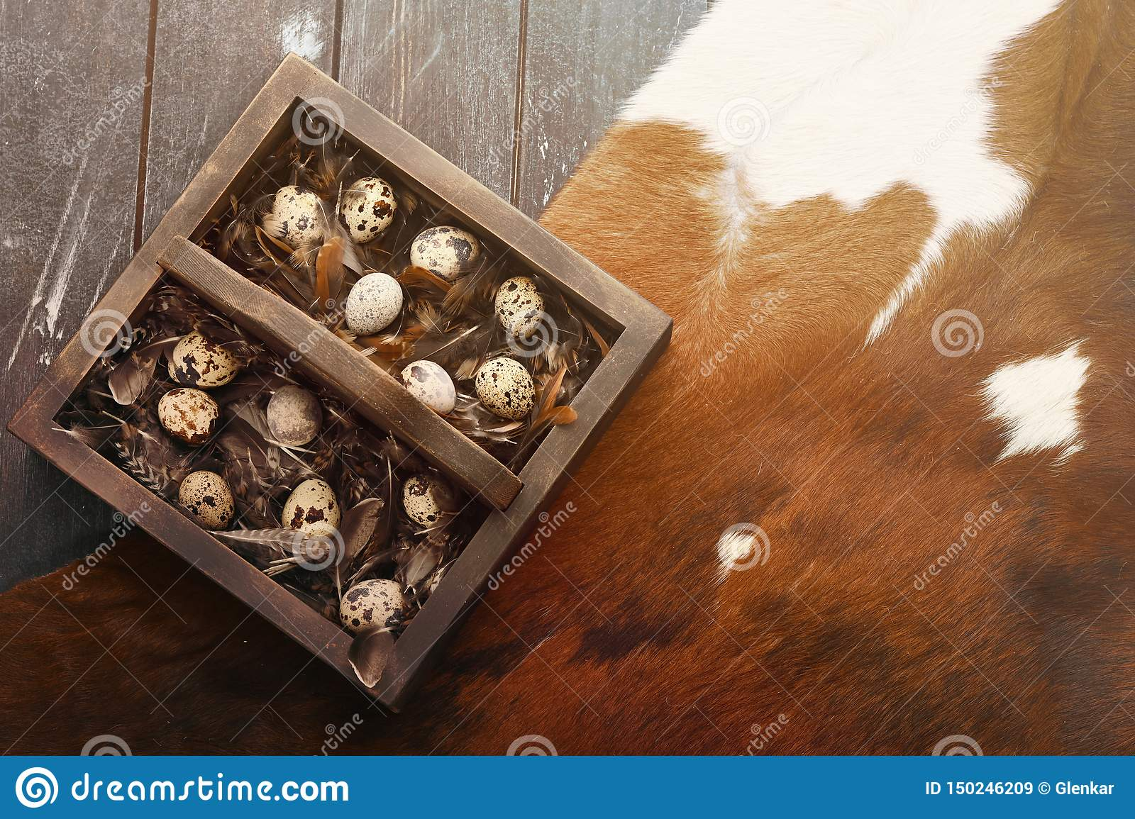 Open eco-friendly wooden box with feathers and quail eggs on animal skin. Rough dyed wooden background. Eggs For Easter.