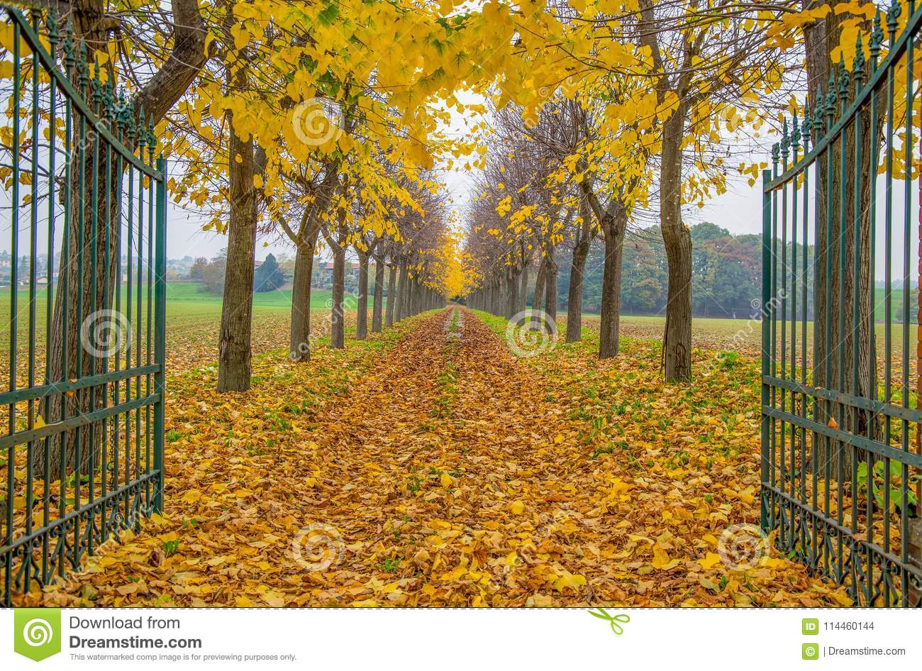 Open gate with foliage in Italy in Autumn time / trees/ gate/ road / empty/ autumn