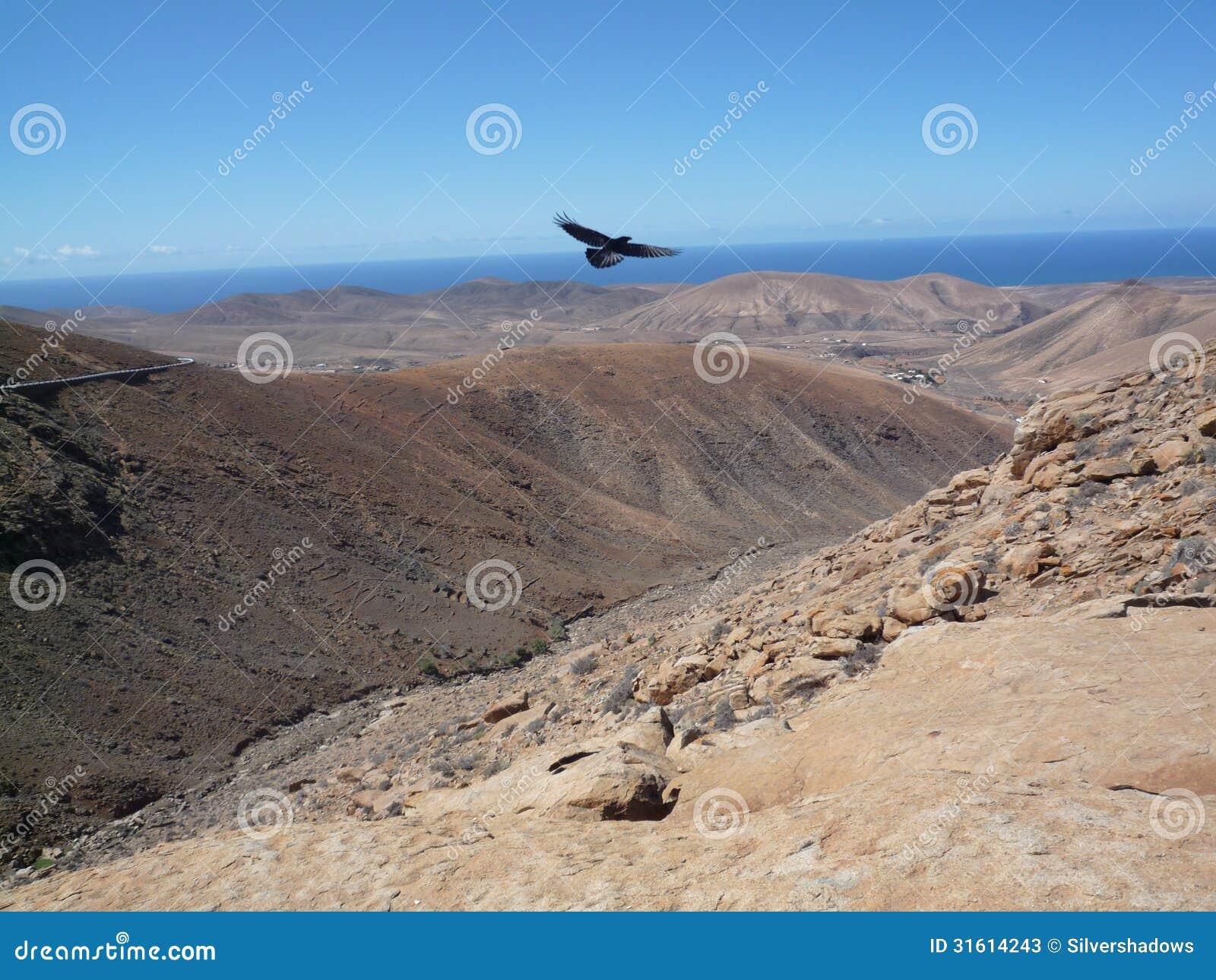 Open Mountain window view with bird in Fuerteventura Canary/islands