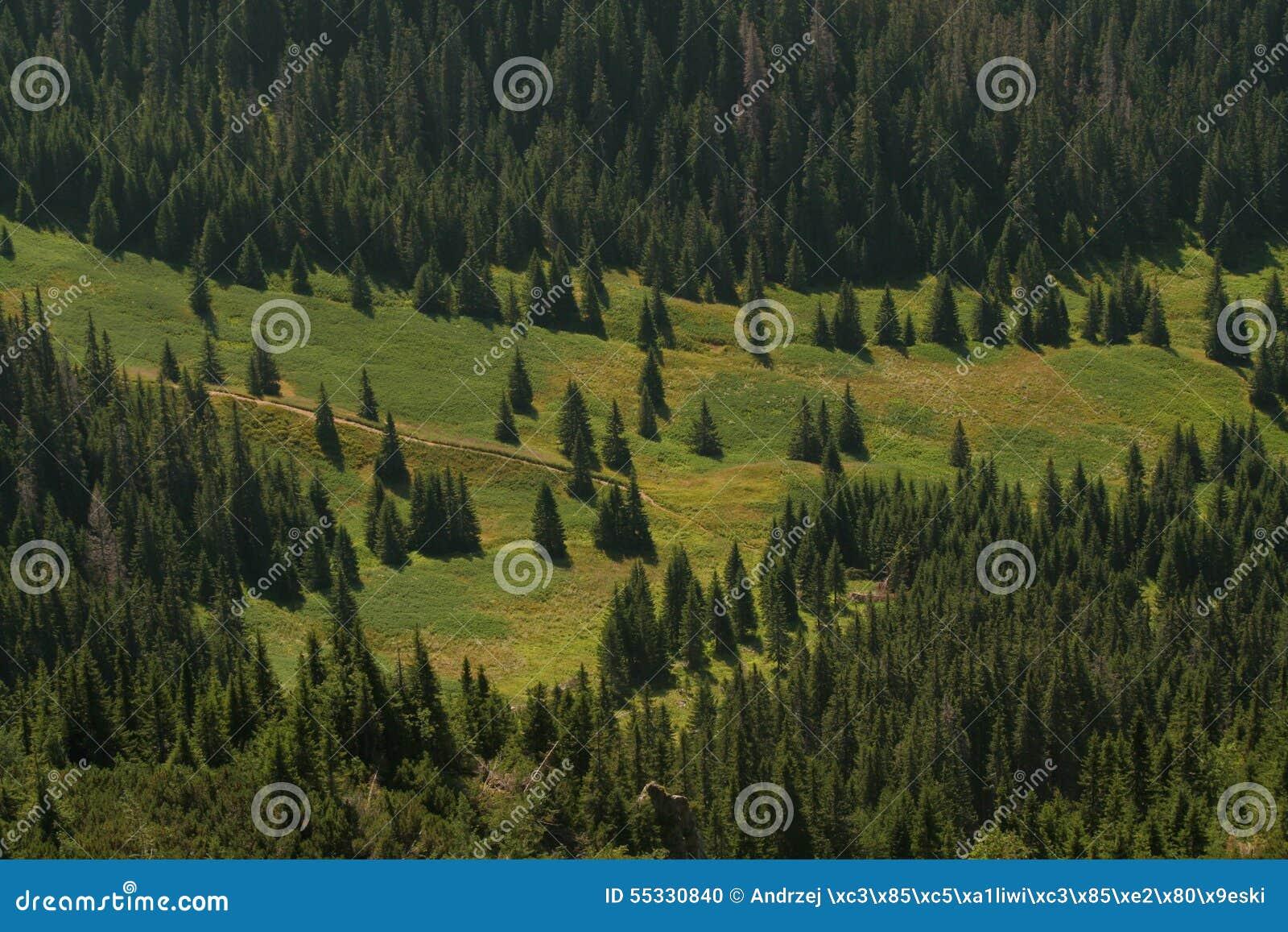 Open plek in het bos - verre mening
