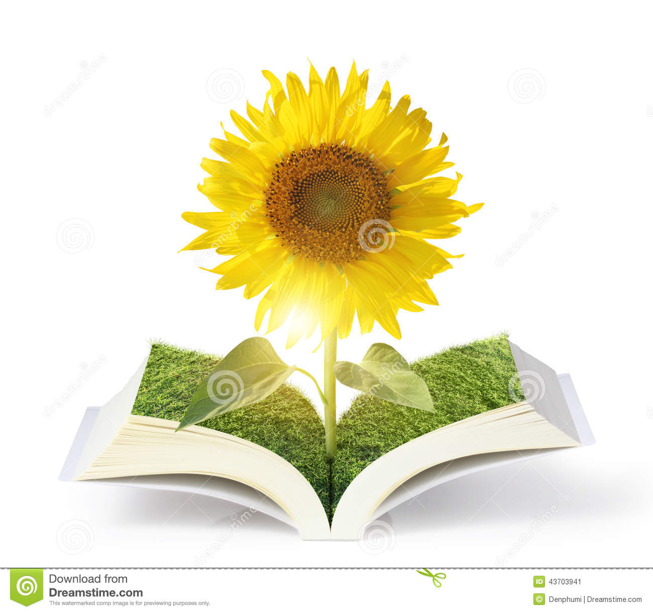 open sun flowers growing book stock illustration image