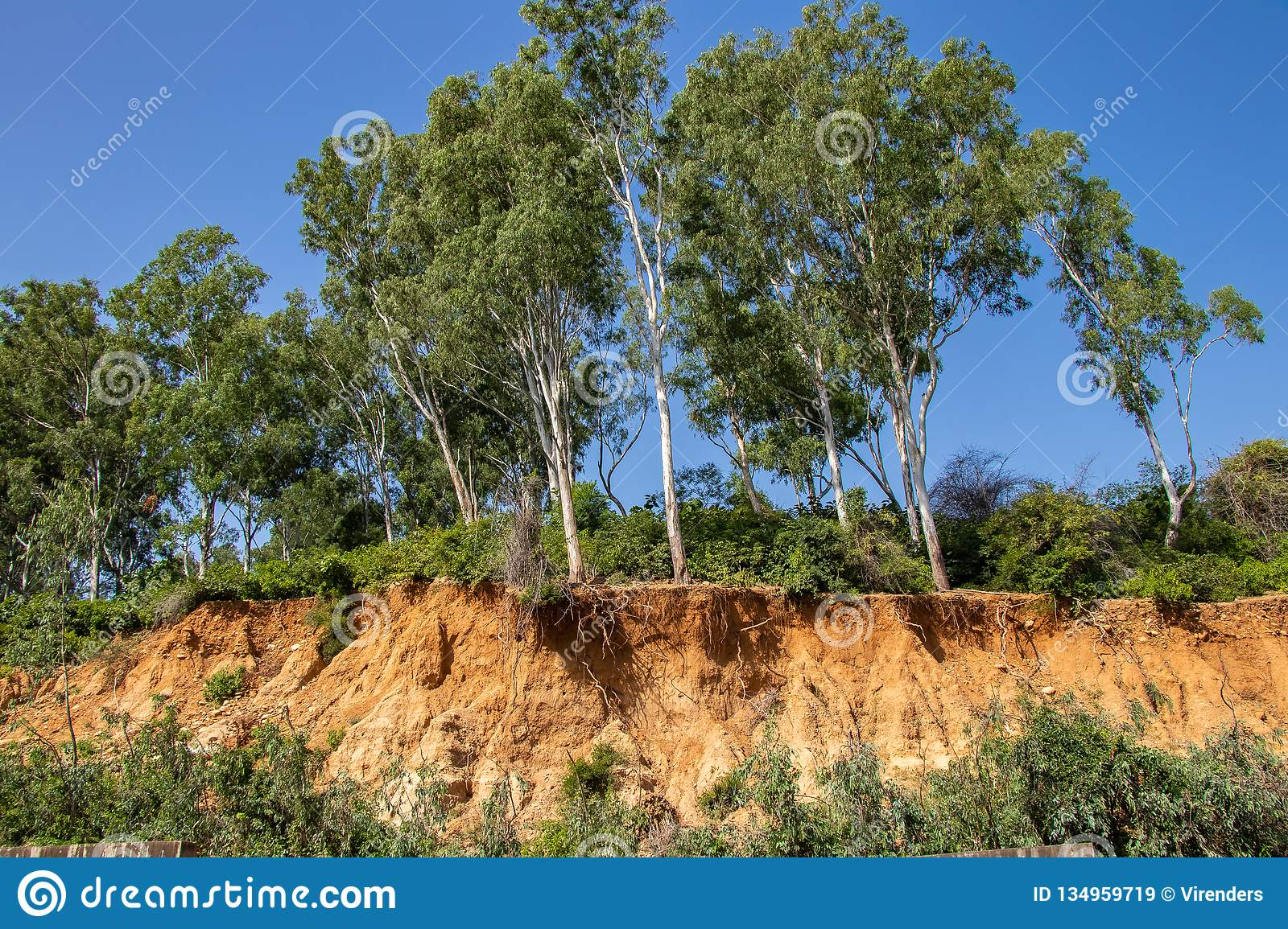 Open trees roots due to landslides, soil erosion, after road cut