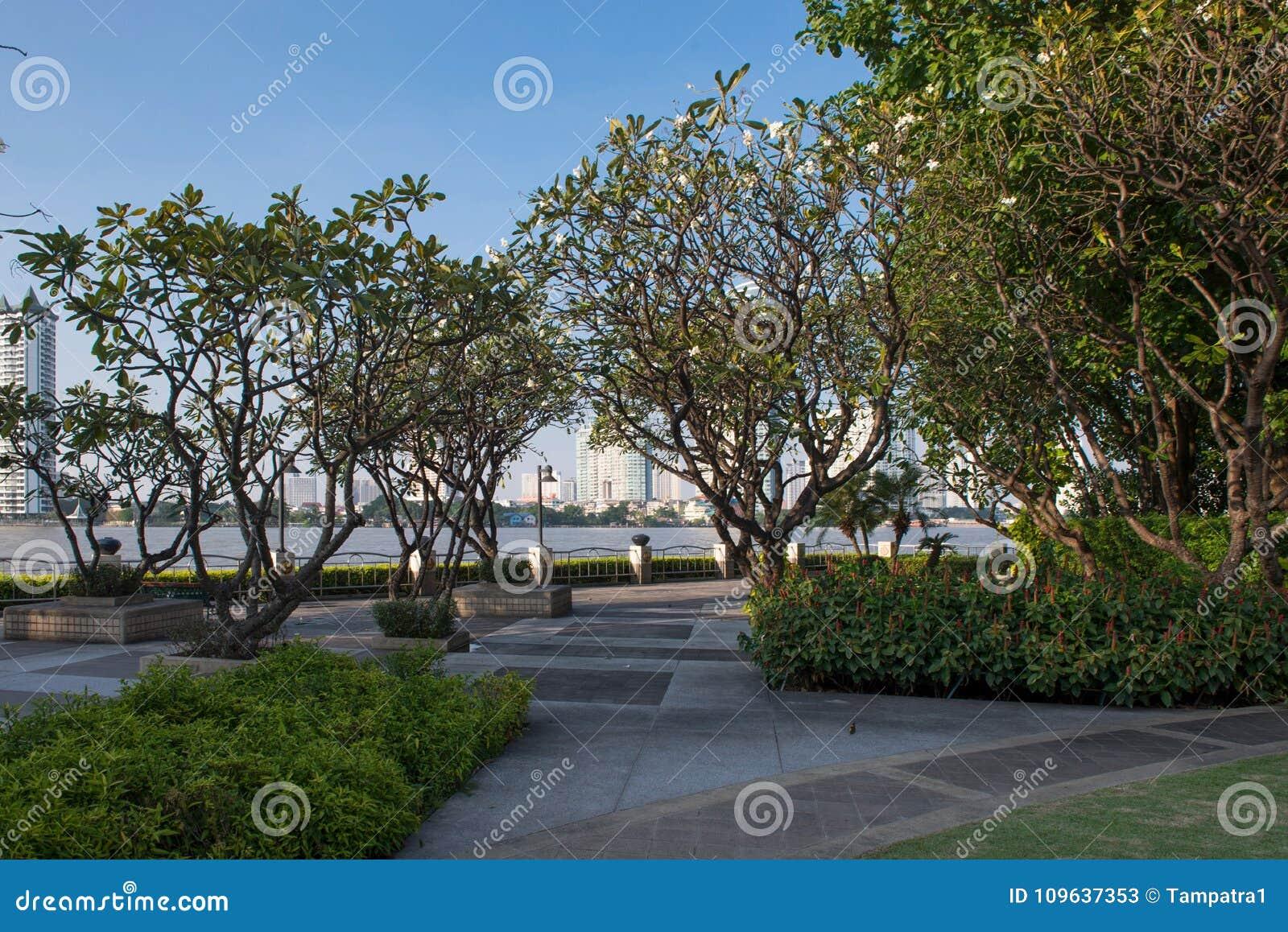 Openbaar park met weelderige bomen en blauwe hemel