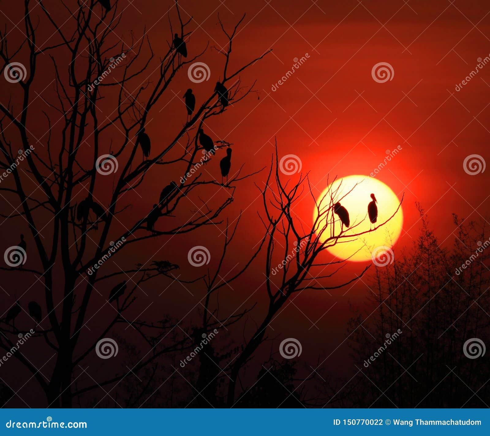 Openbill storkfamilj och soluppgång