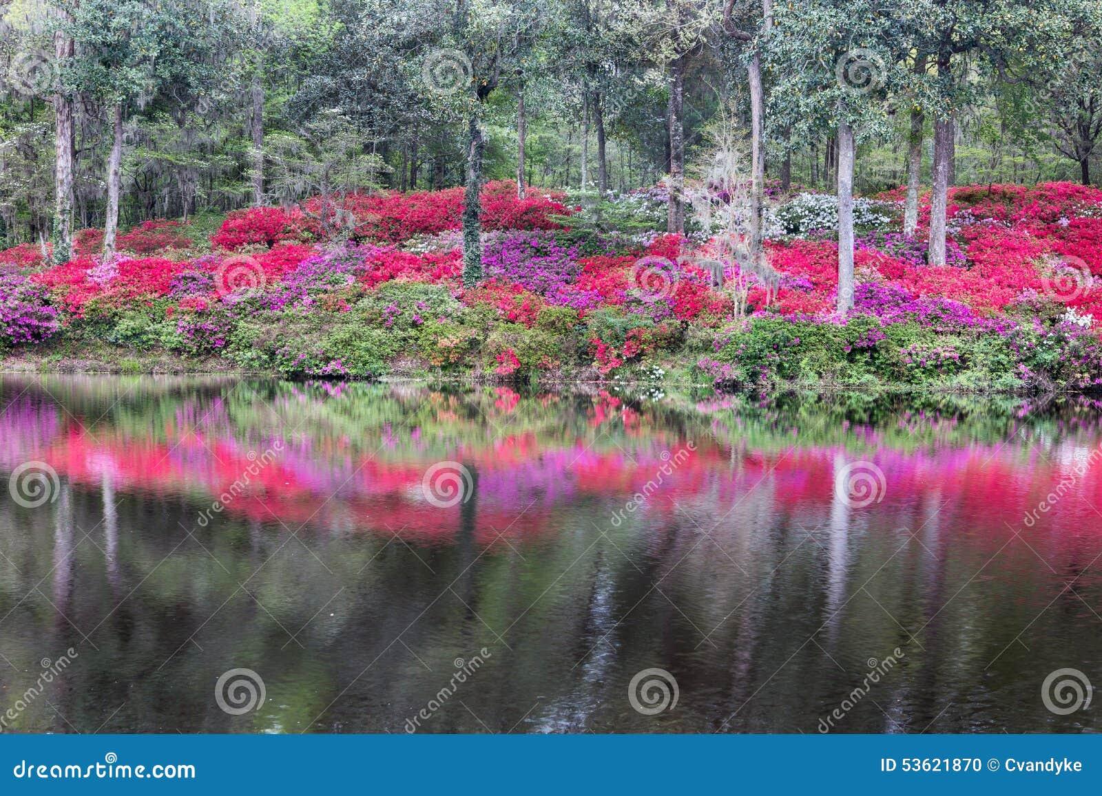 Openluchtsc van Hellingsazalea garden water reflection