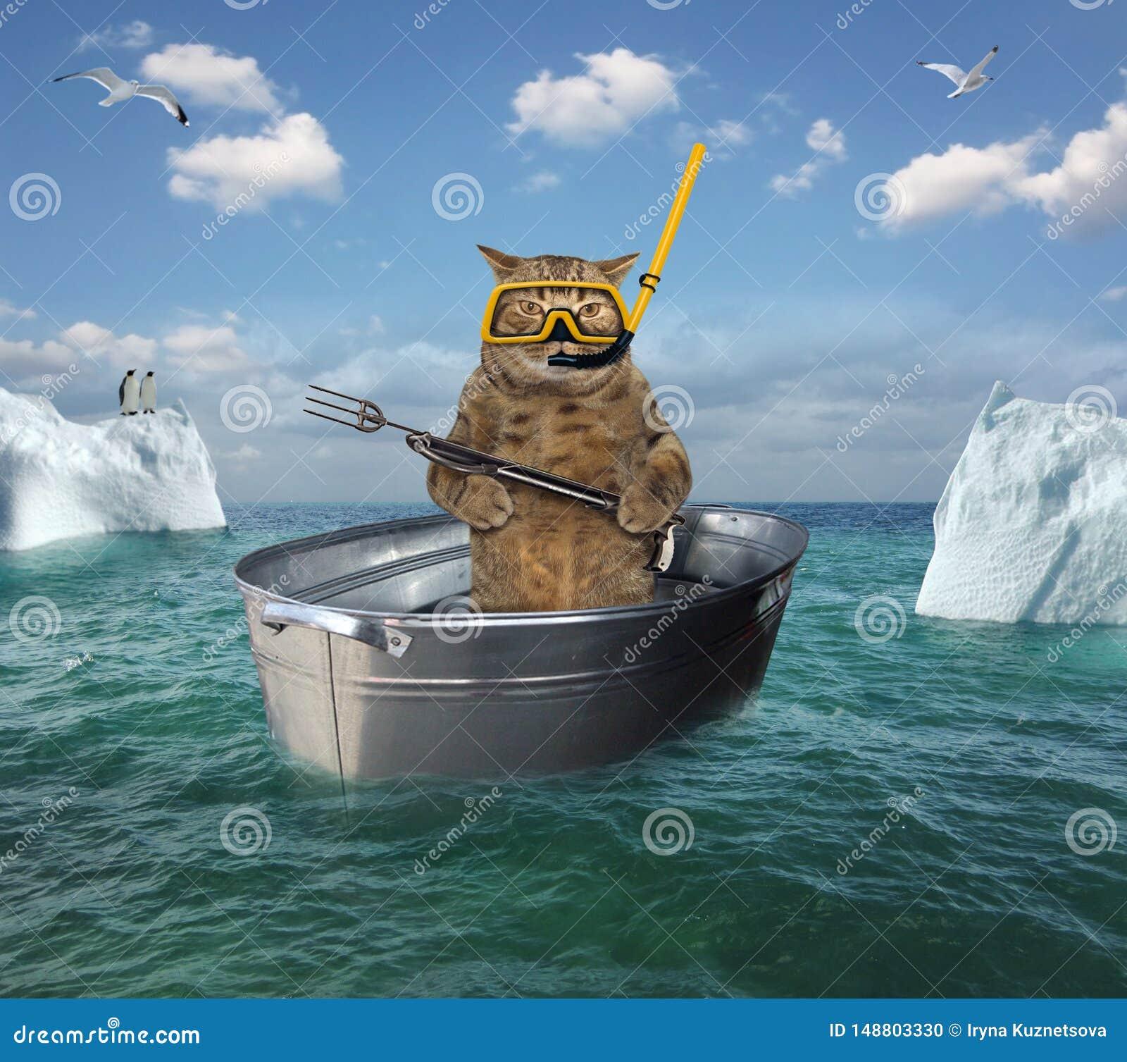 Operatore subacqueo del gatto che va alla deriva in un catino