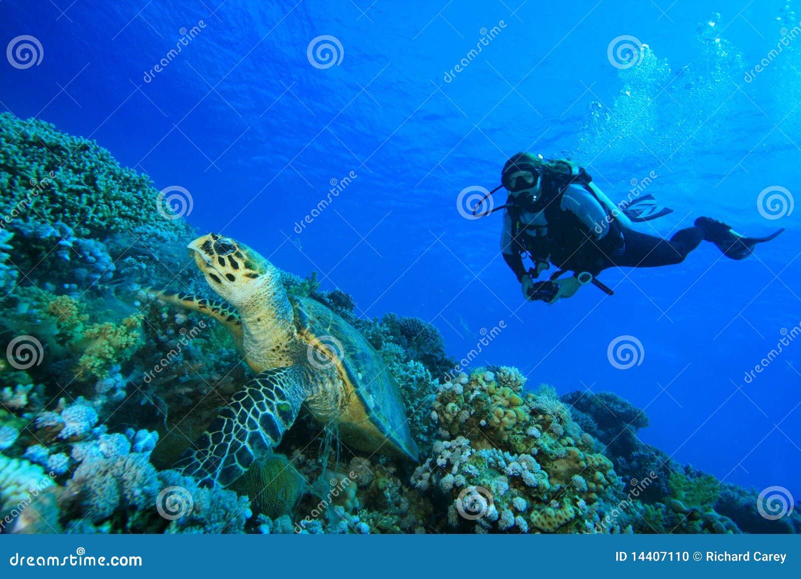 Operatore subacqueo di scuba e della tartaruga