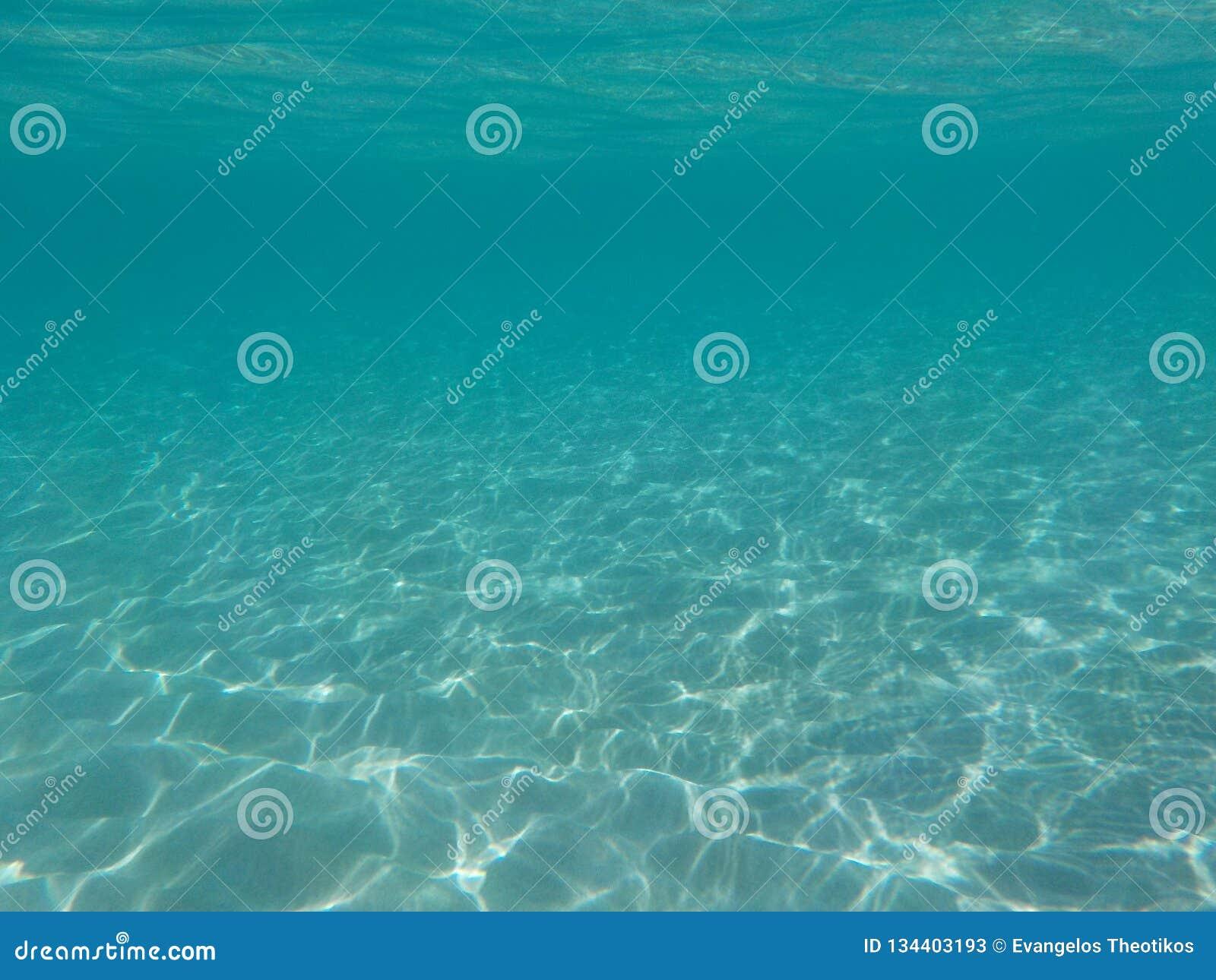 Operatore subacqueo e pesci