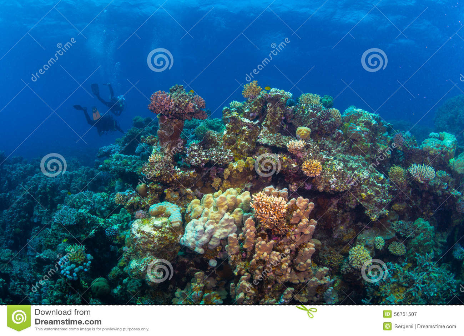 Operatore subacqueo sul reaf