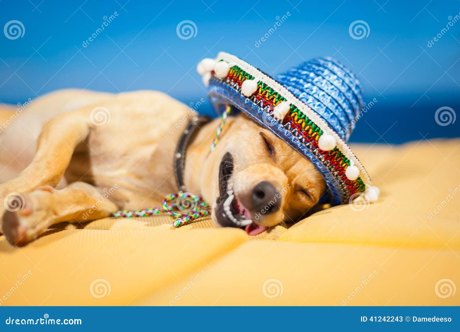 Opiły meksykanina pies