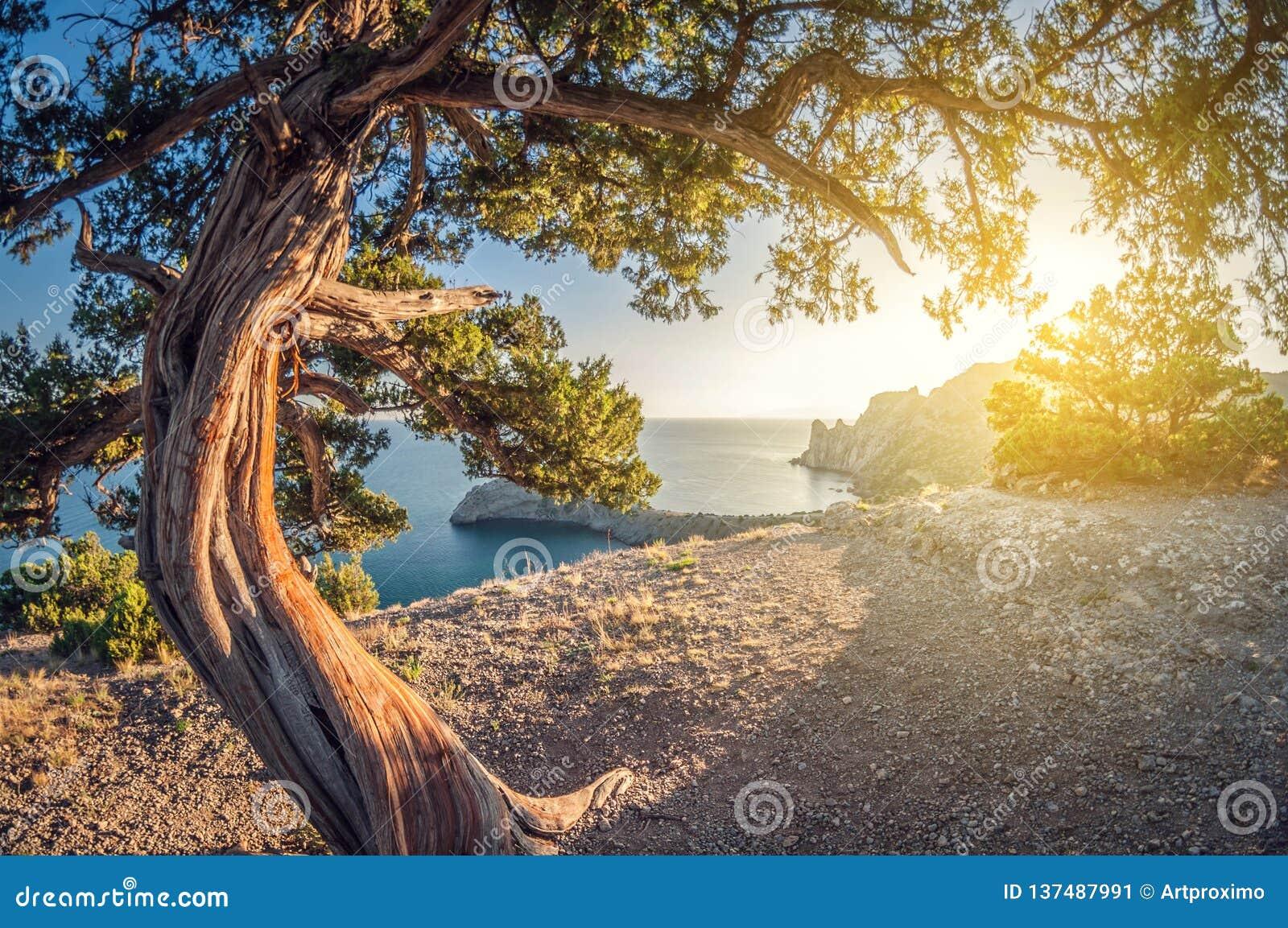 Opinião alta da paisagem bonita das rochas à costa e ao zimbro opinião de lente de fisheye da perspectiva da distorção
