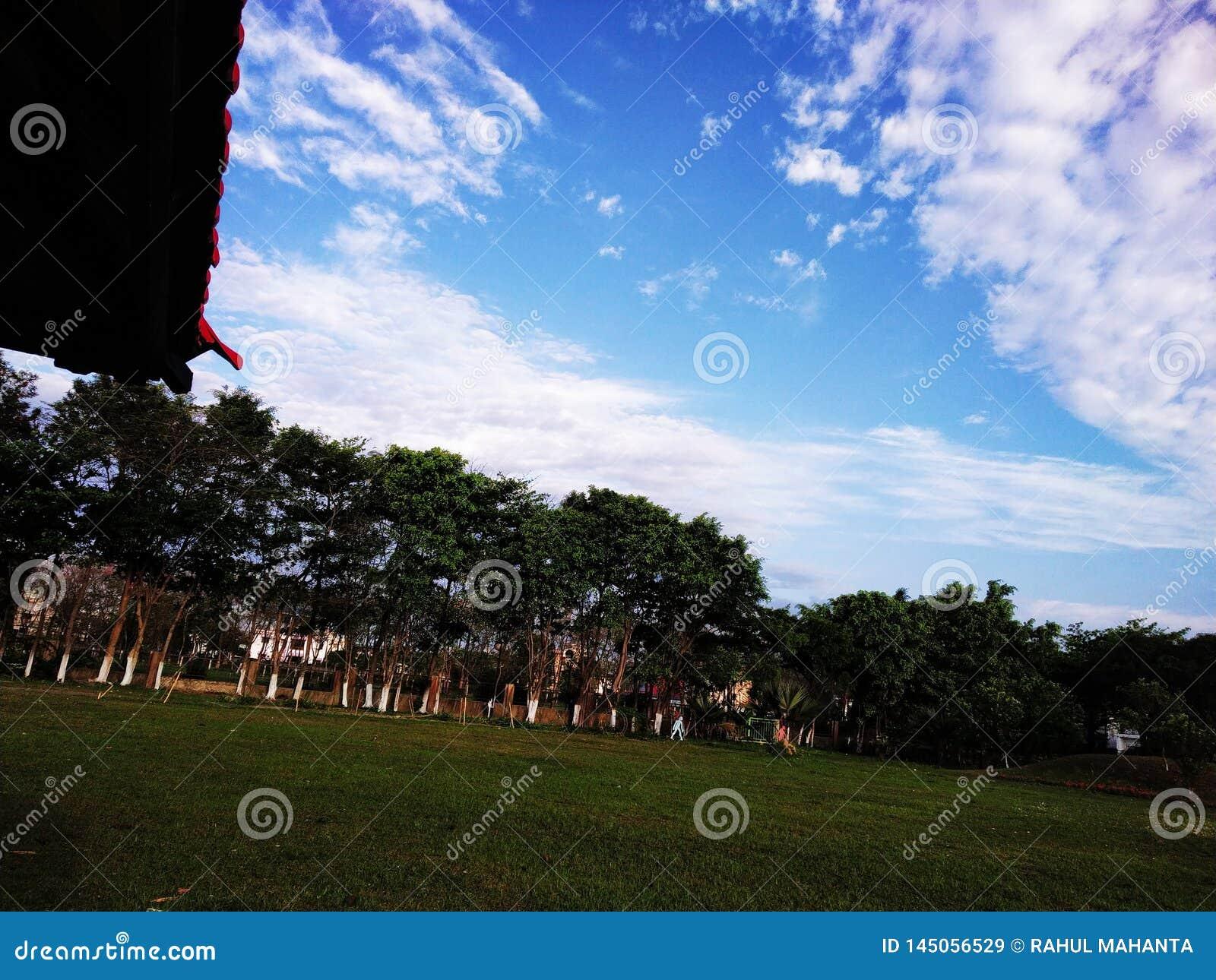 Opinião bonita de céu azul e em torno das árvores