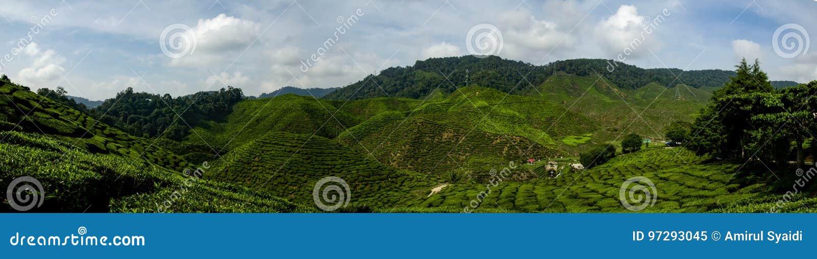 Opinião bonita do panorama em Cameron Highlands, Malásia com a plantação de chá verde da natureza perto do monte