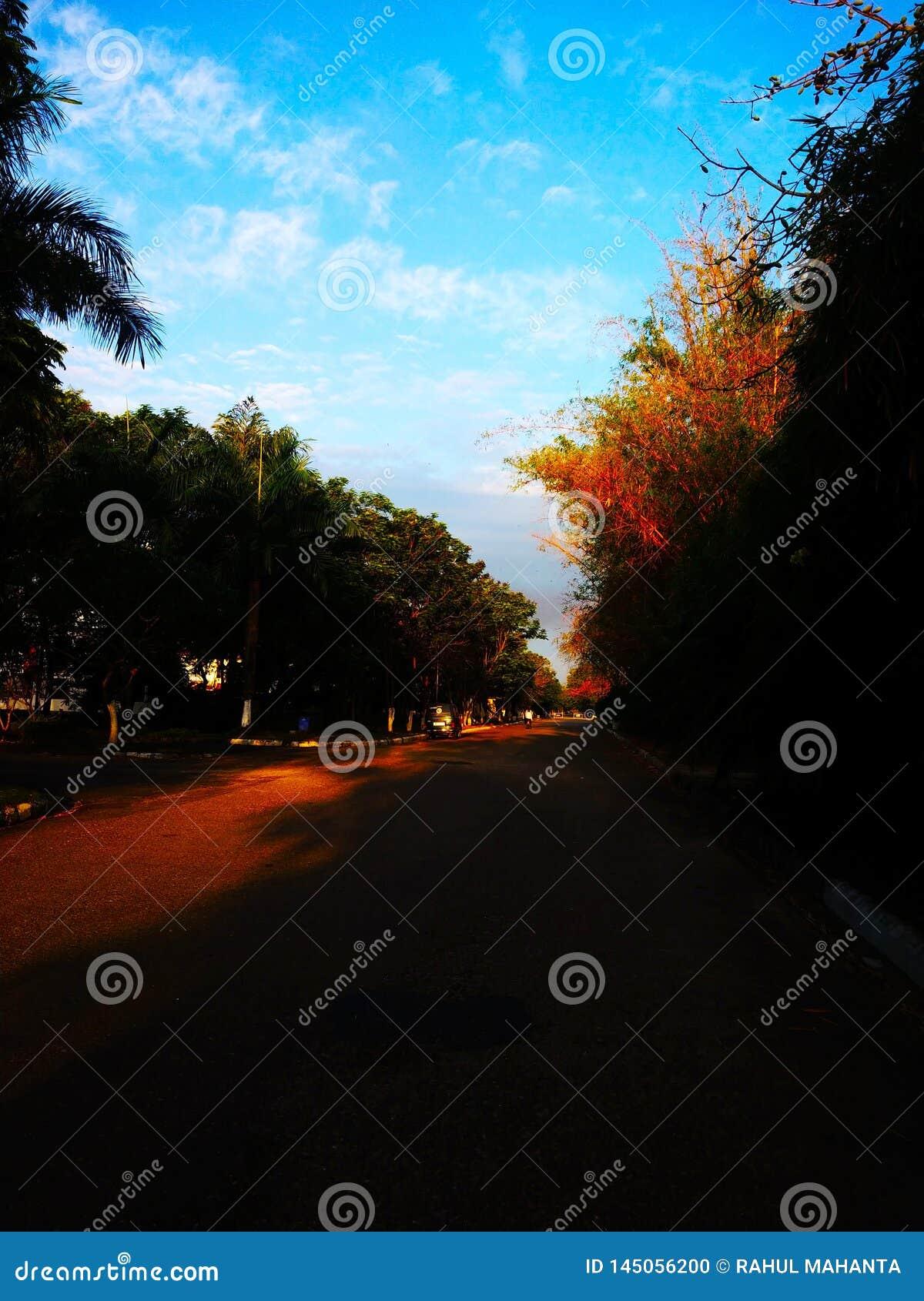 Opinião bonita do parque e em torno da árvore