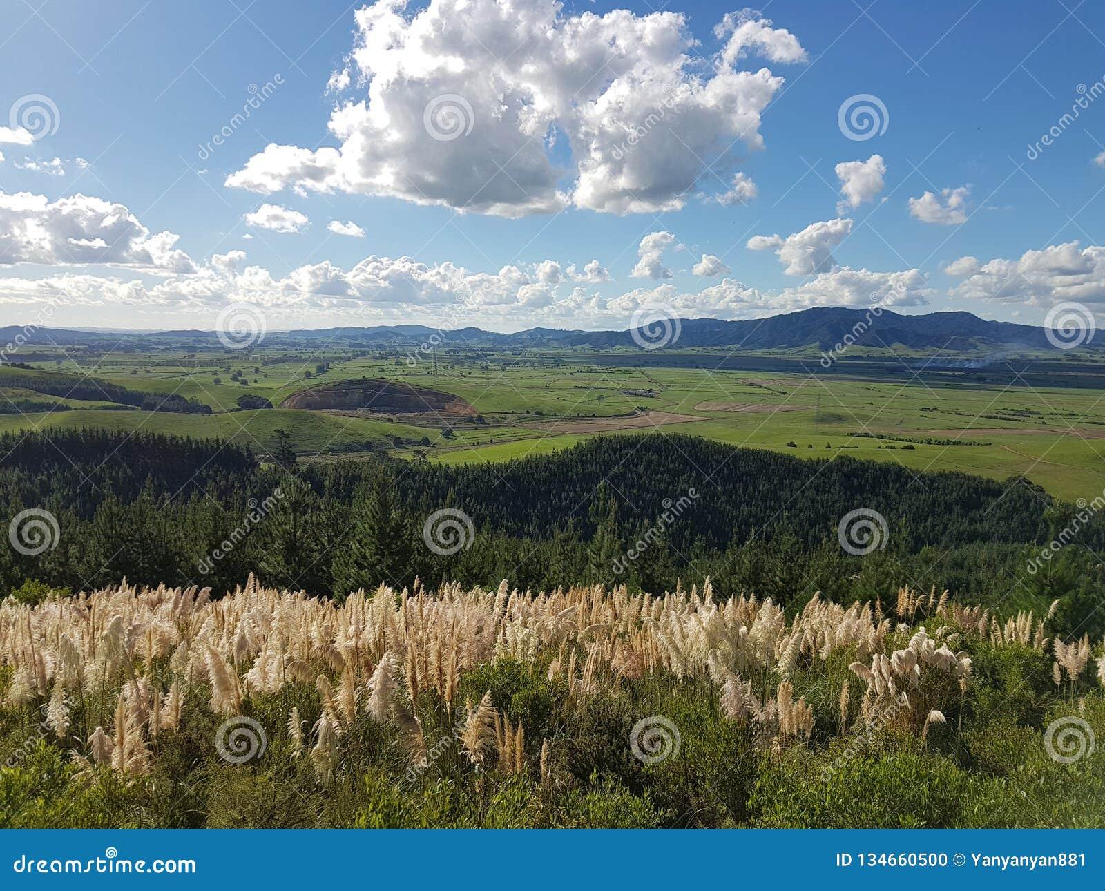 Opinião calma da paisagem em Nova Zelândia