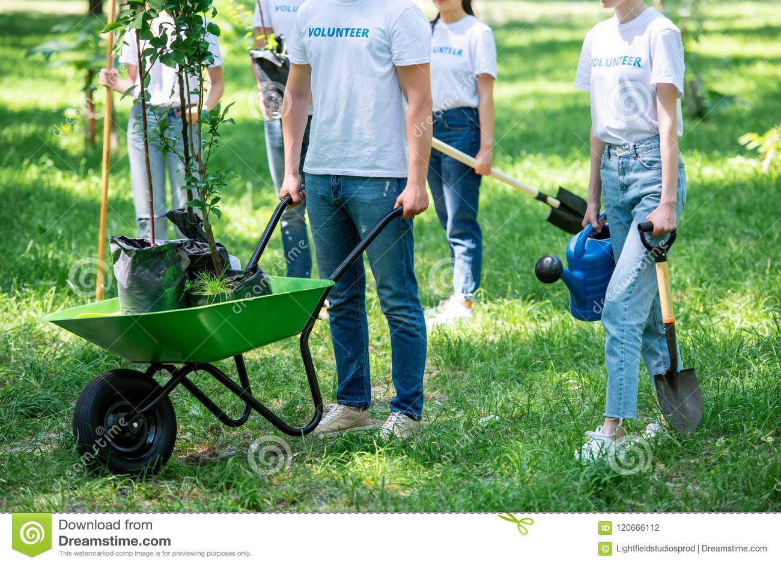 Opinião colhida os voluntários que plantam árvores no verde