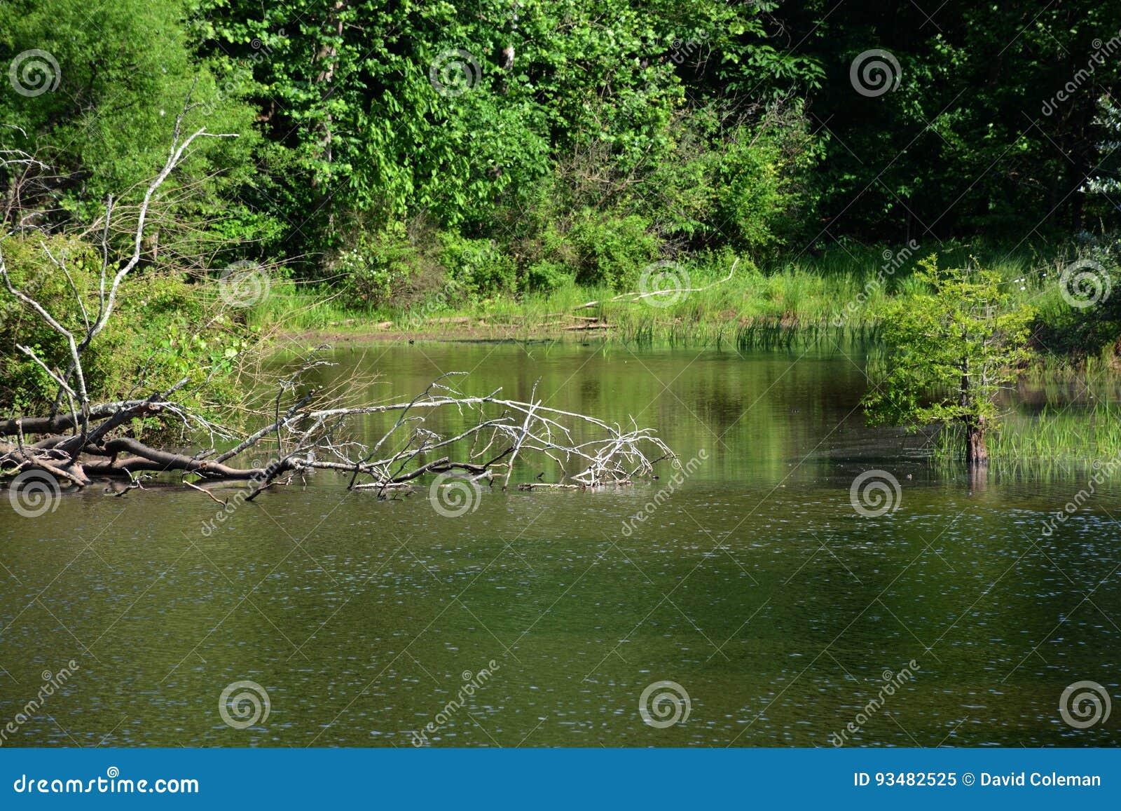 Opinião da lagoa