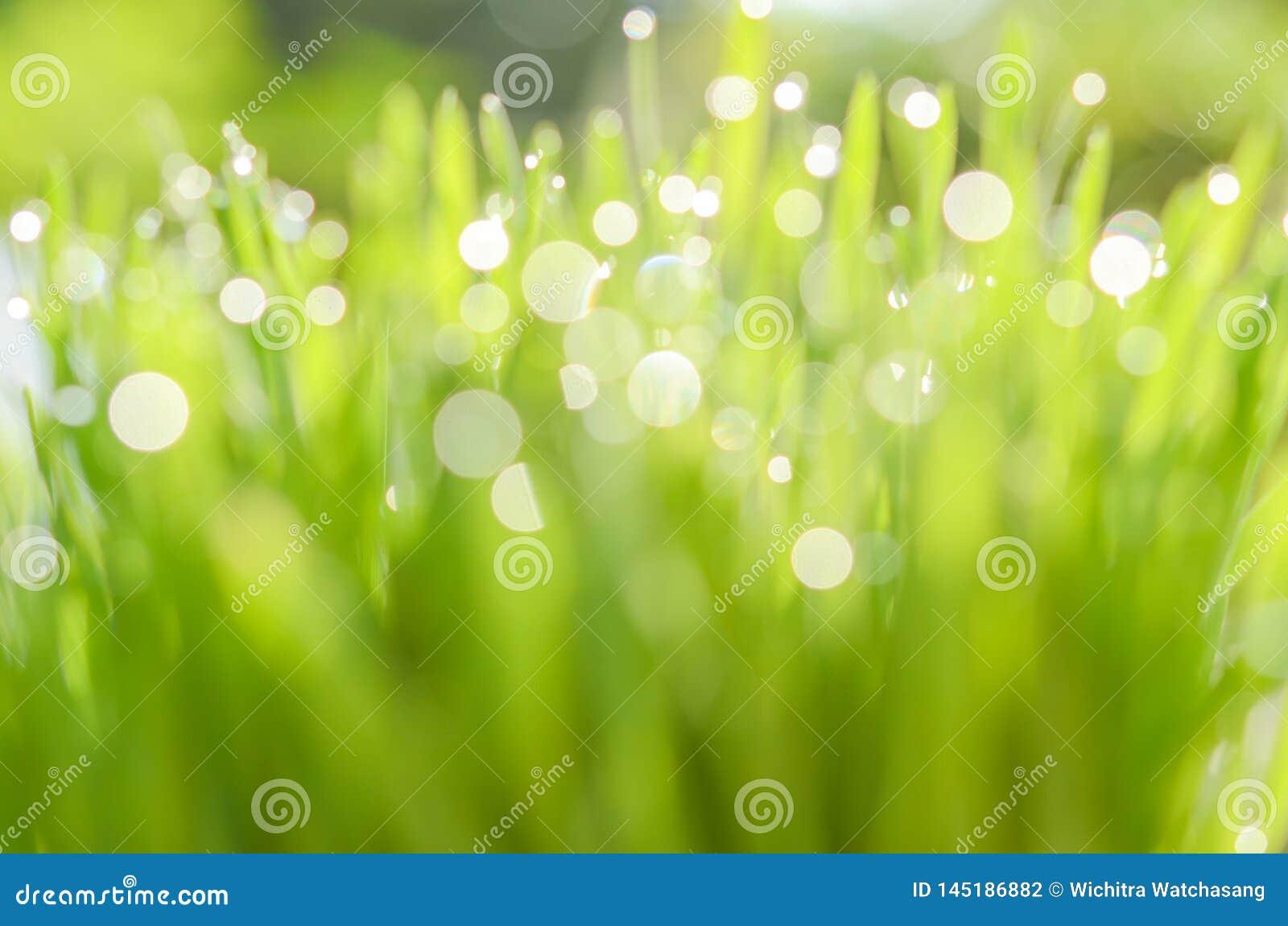 Opinião da natureza do close up e Bokeh abstrato da folha verde no fundo verde borrado