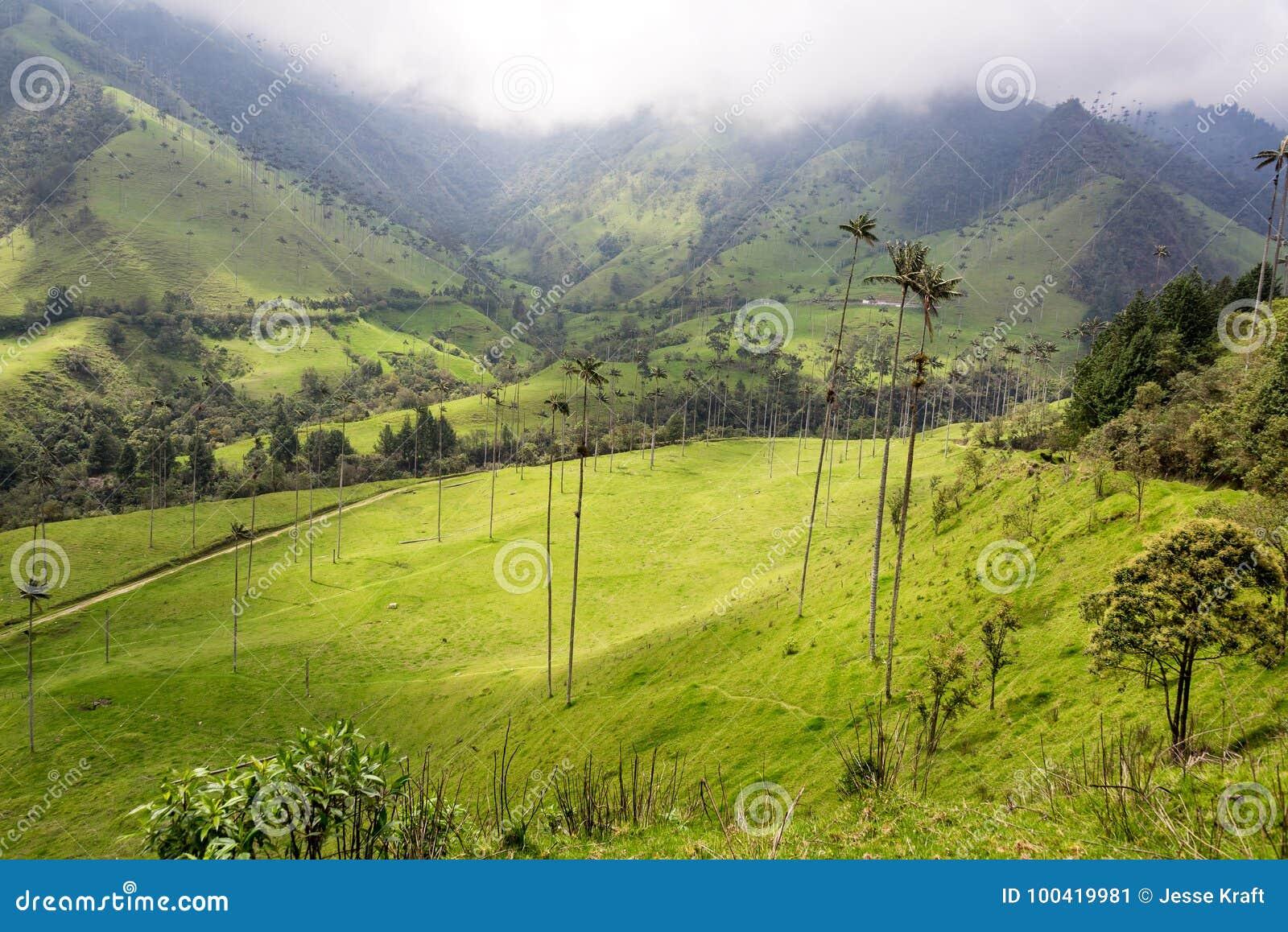 Opinião da paisagem do vale de Cocora