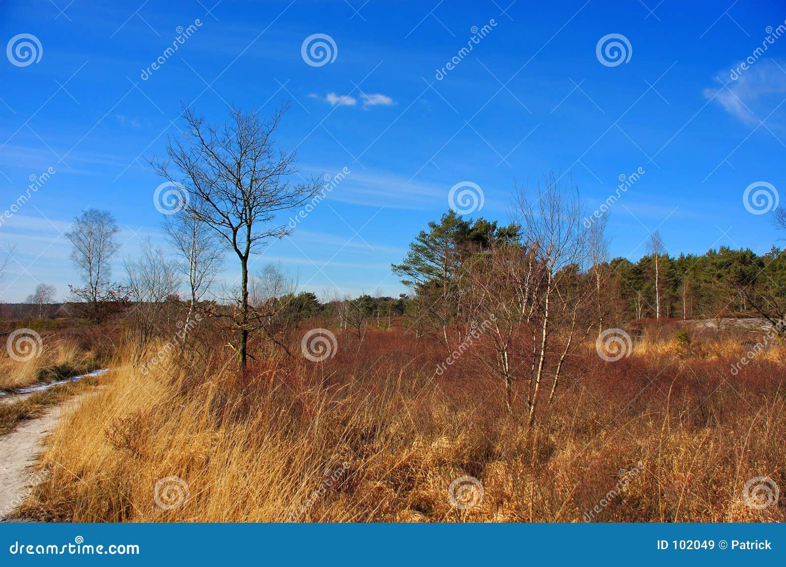 Opinião da paisagem, prado.