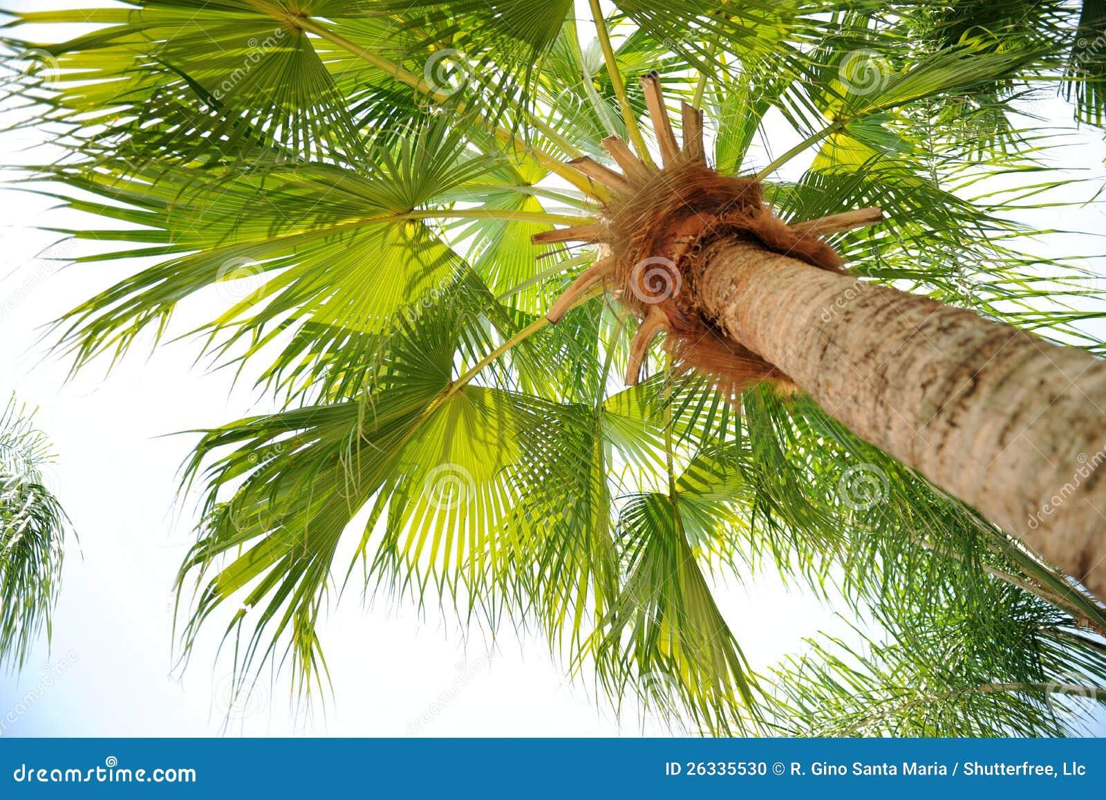 Opinião da palmeira de abaixo