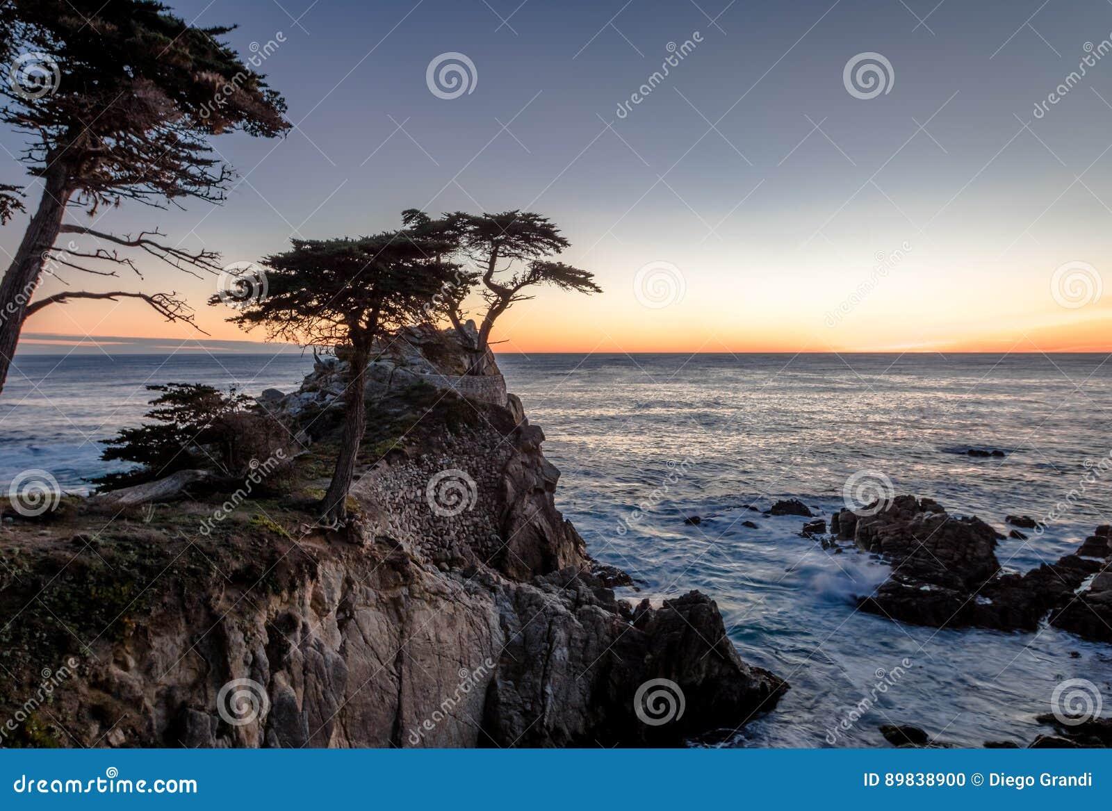 Opinião de árvore solitária de Cypress no por do sol ao longo da movimentação famosa de 17 milhas - Monterey, Califórnia, EUA