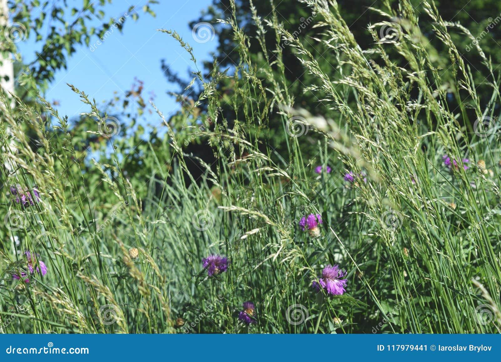 Opinião de baixo ângulo a grama fresca