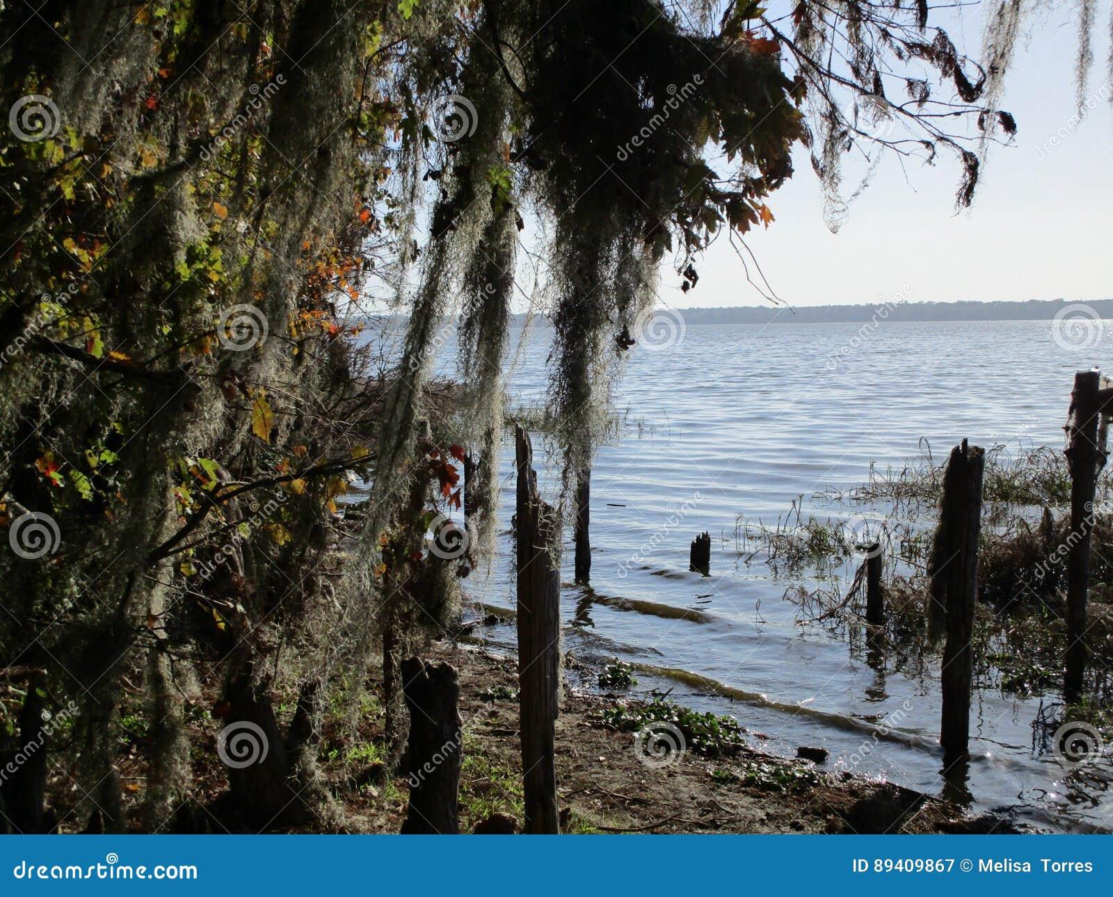 Opinião do lago