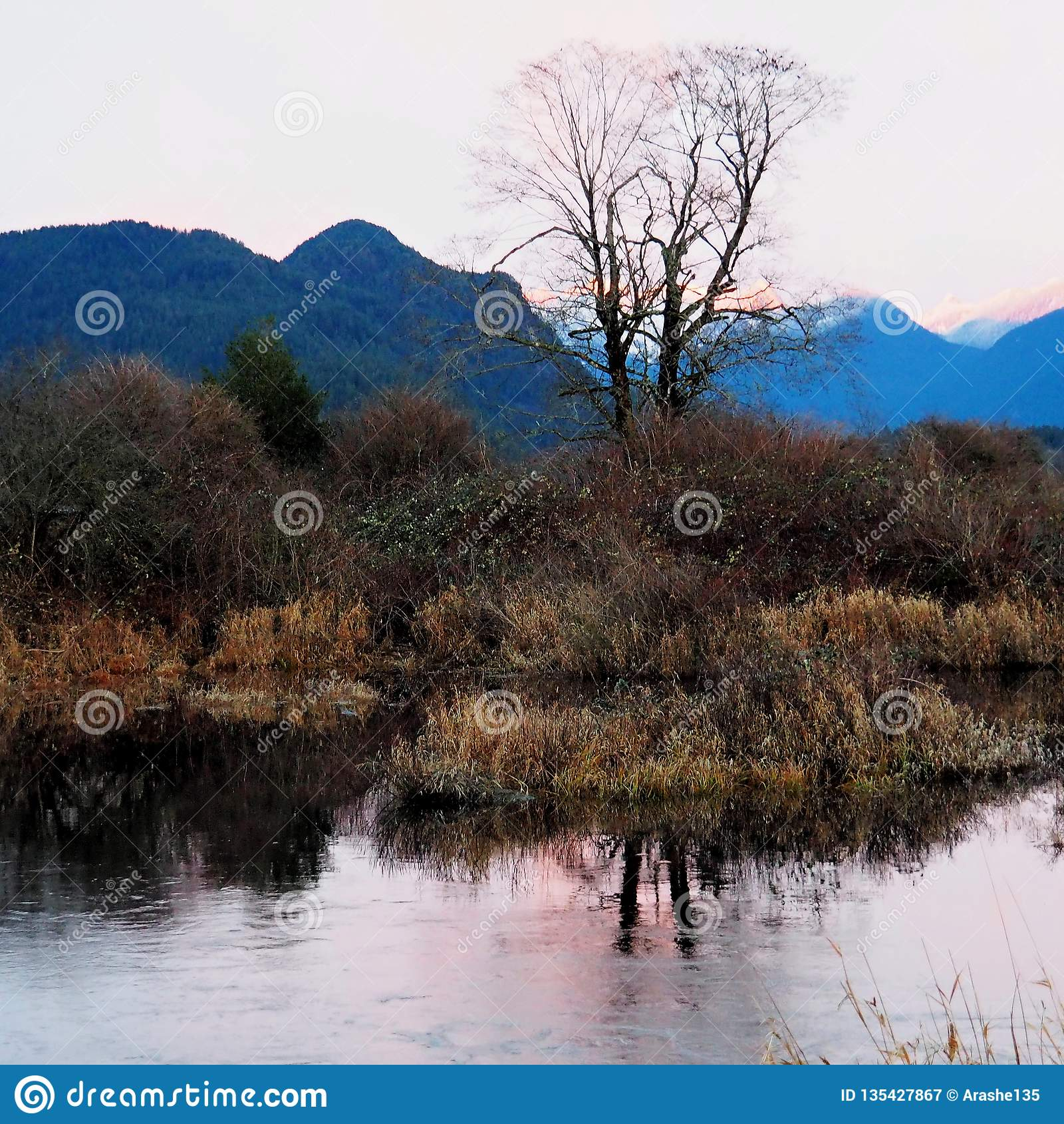 Opinião do lago Pitt de uma árvore perto da terra do pântano
