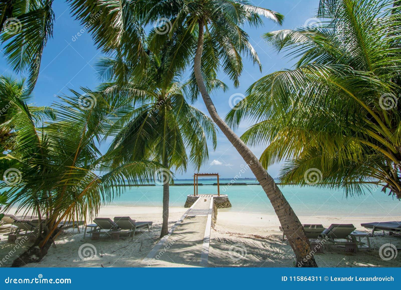 Opinião ensolarada tropical bonita da paisagem da praia com palmeiras e oceano na ilha no recurso