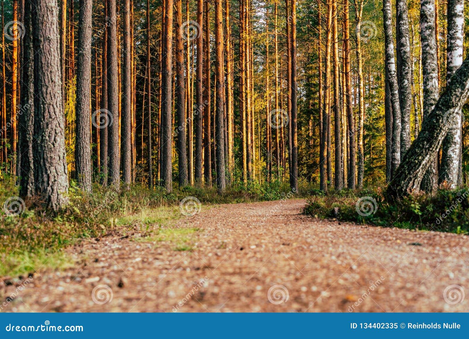 Opinião Forest Road, direção mais profunda nas madeiras