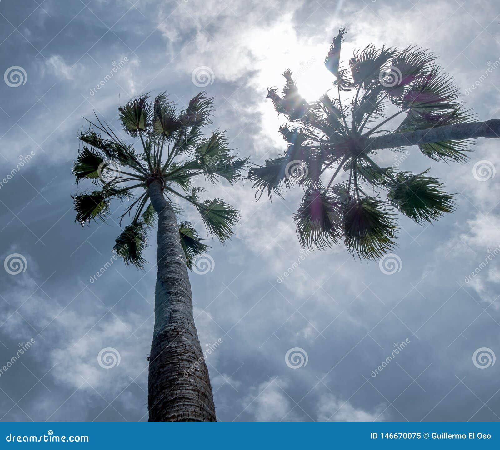 Opinião grande do céu com duas palmeiras